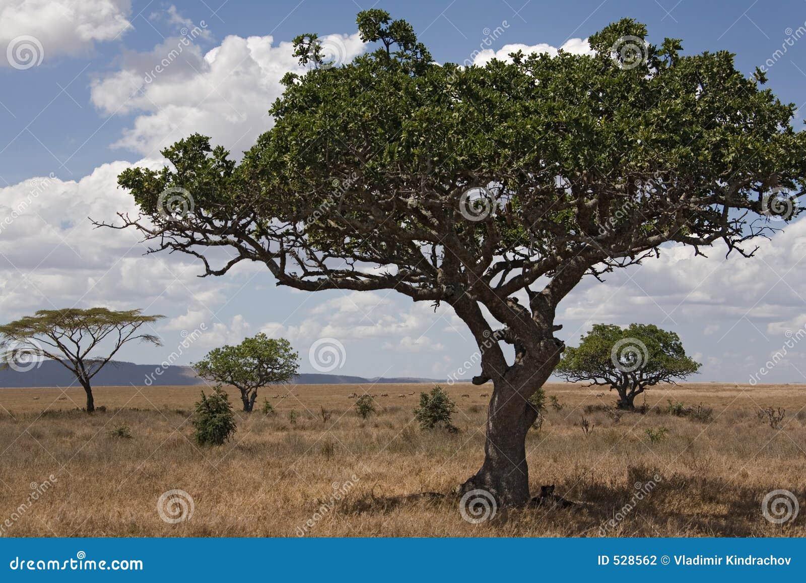 Serengeti da paisagem 028 de África