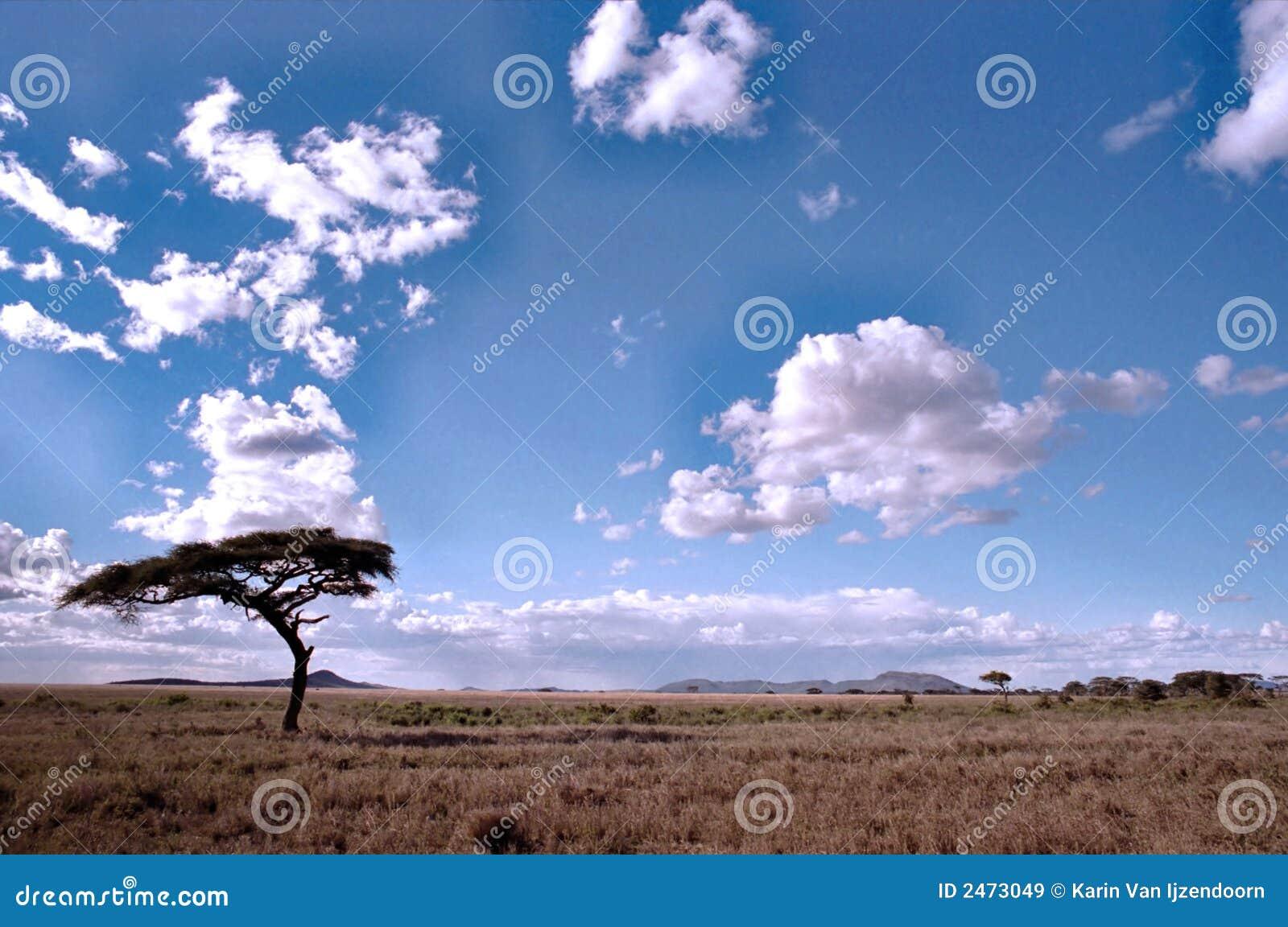 Serengeti Landschaft