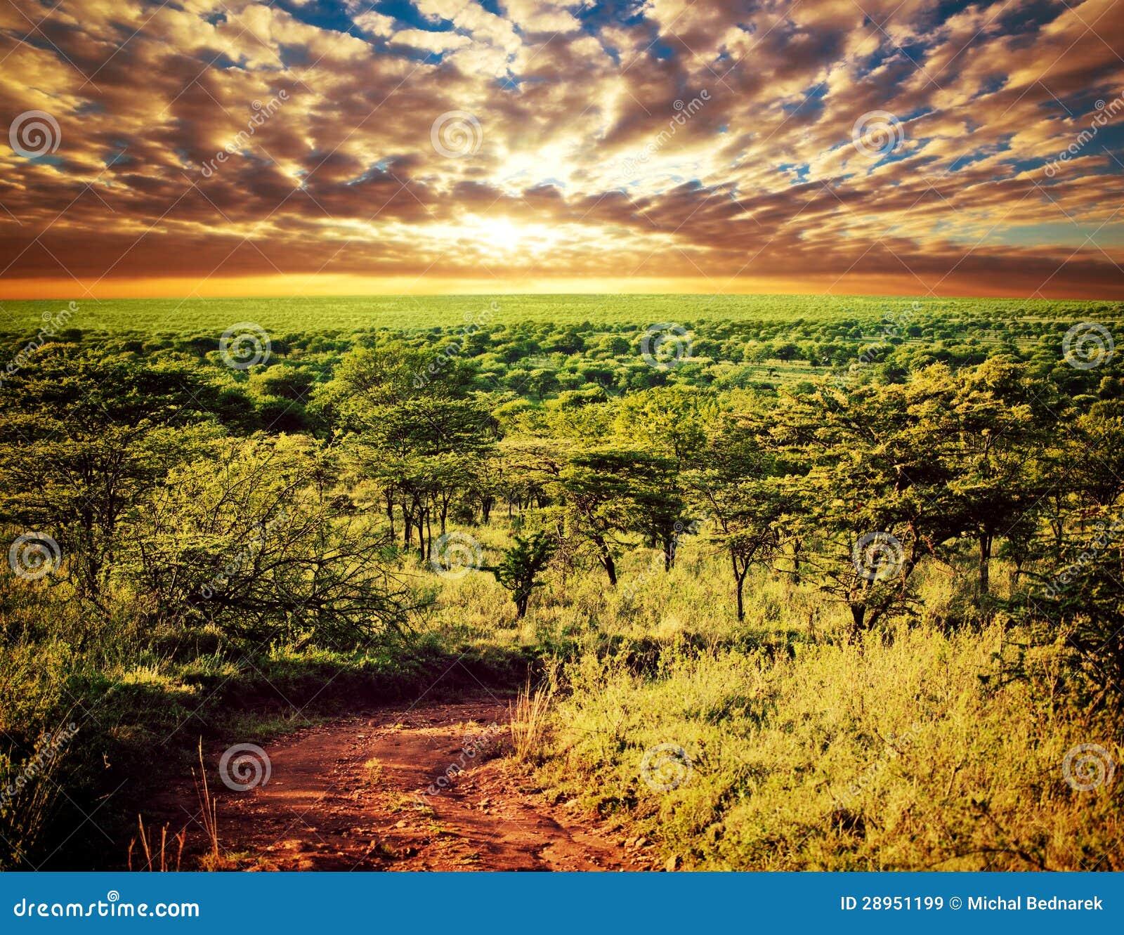 Serengeti sawanny krajobraz w Tanzania, Afryka.