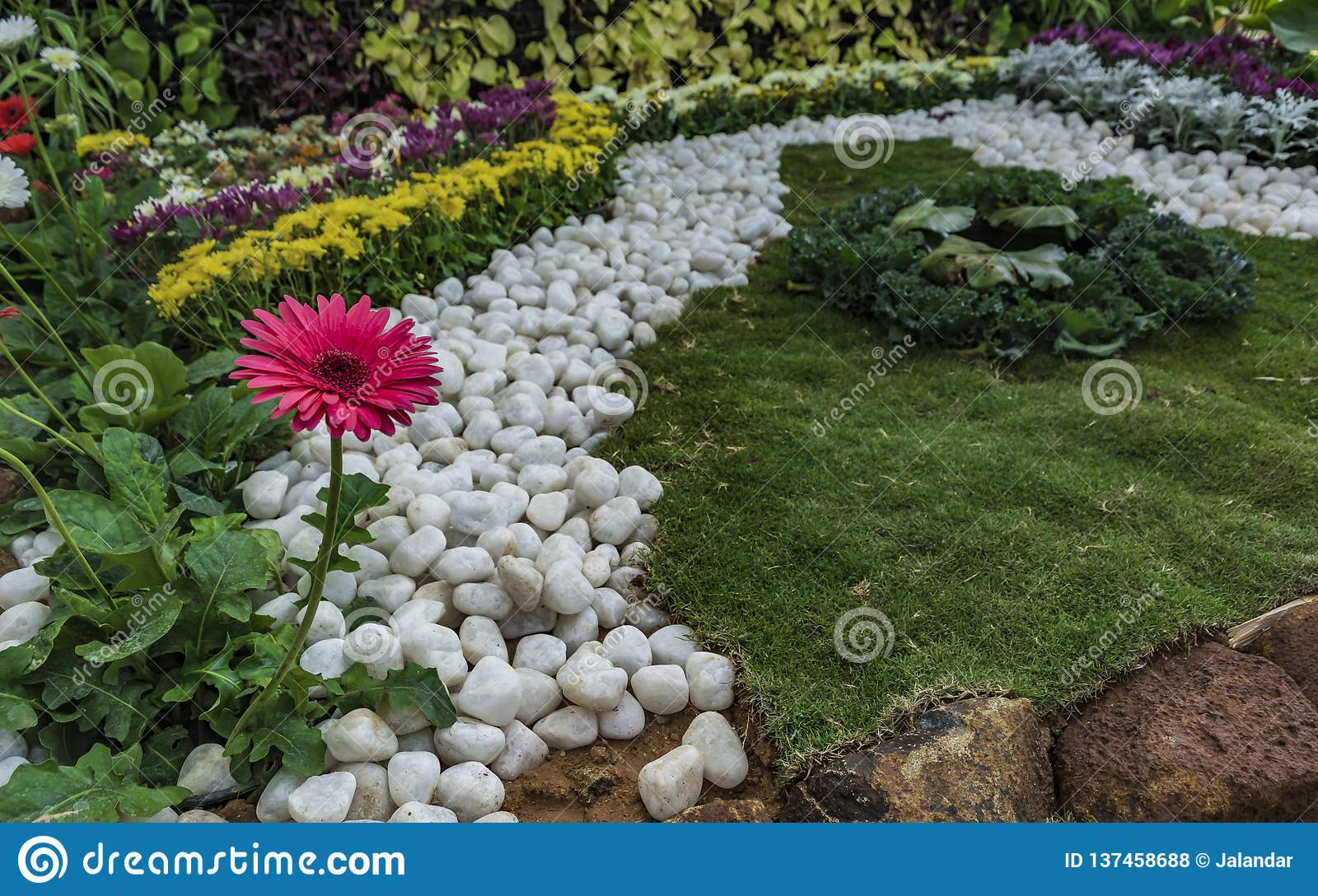Serenity: Home Garden - White Pebbles, Lawn and Red Daisy flower