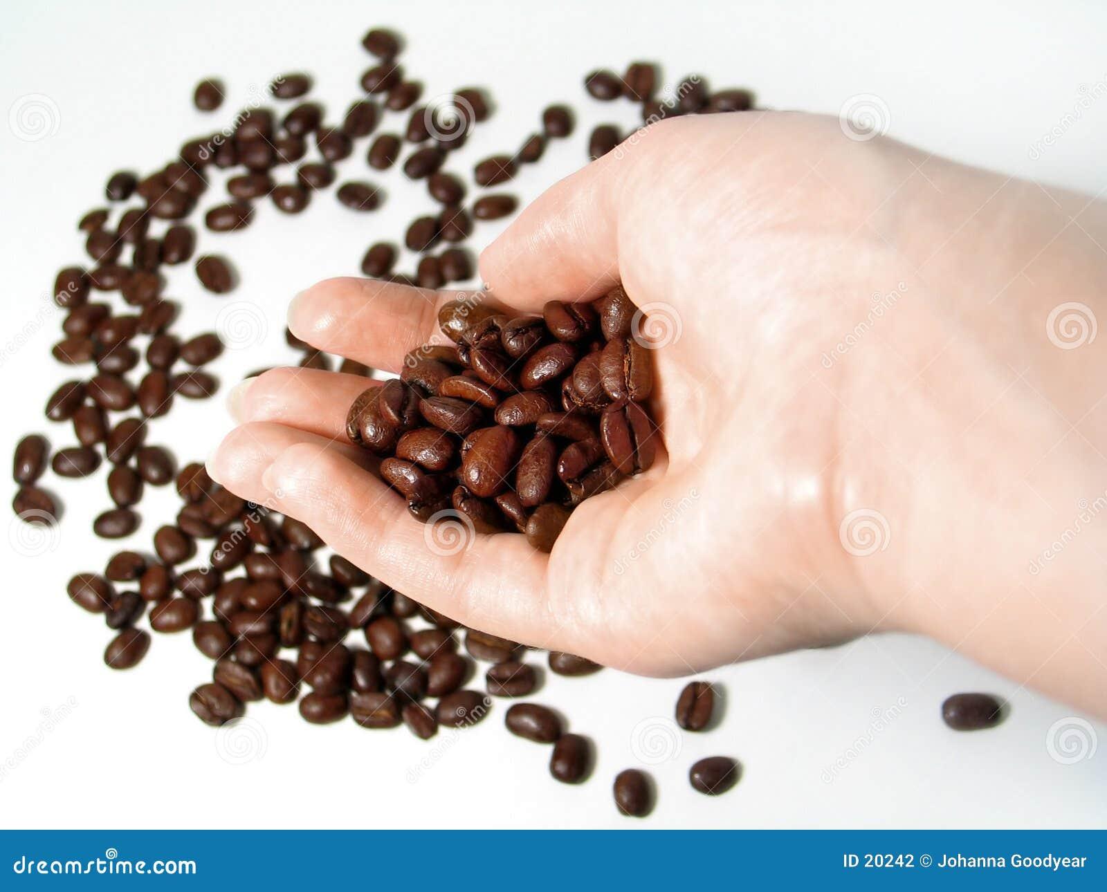 Serie 3 del café