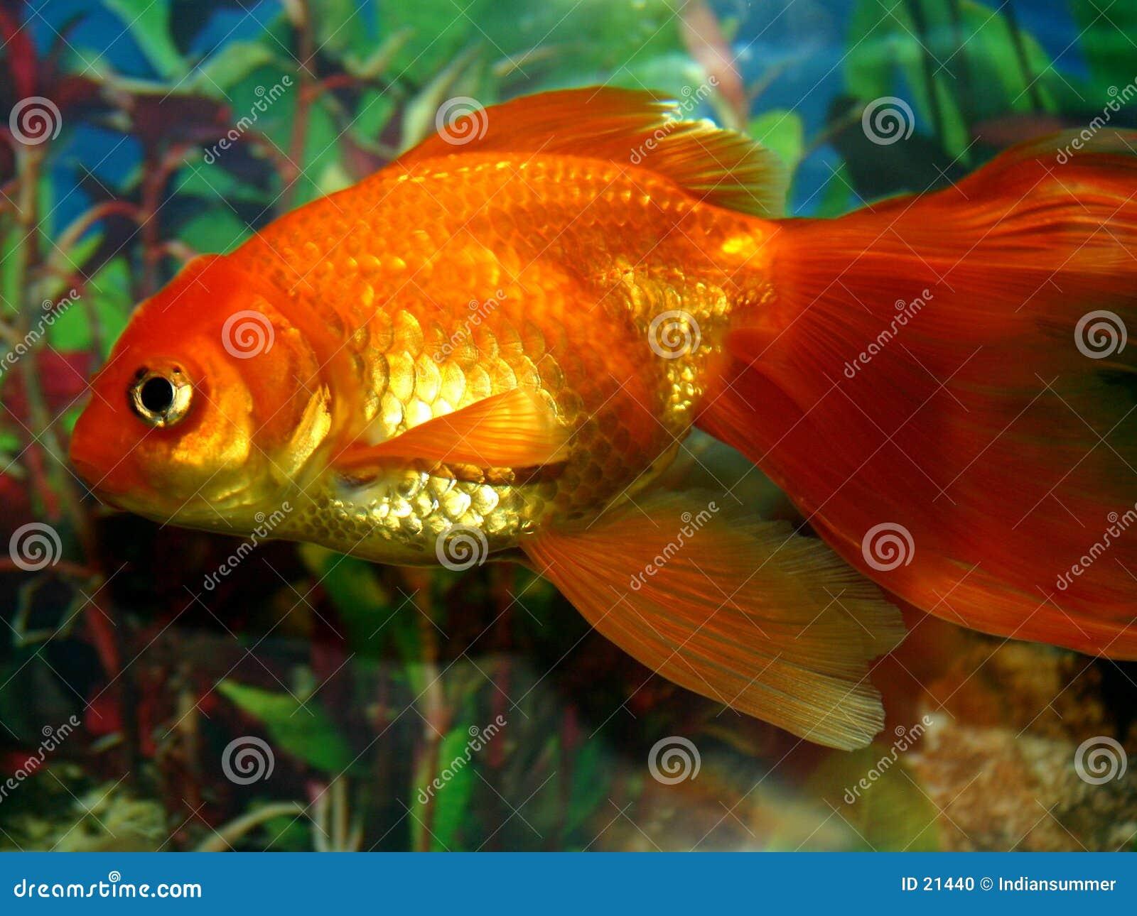 Serie för fisk ii