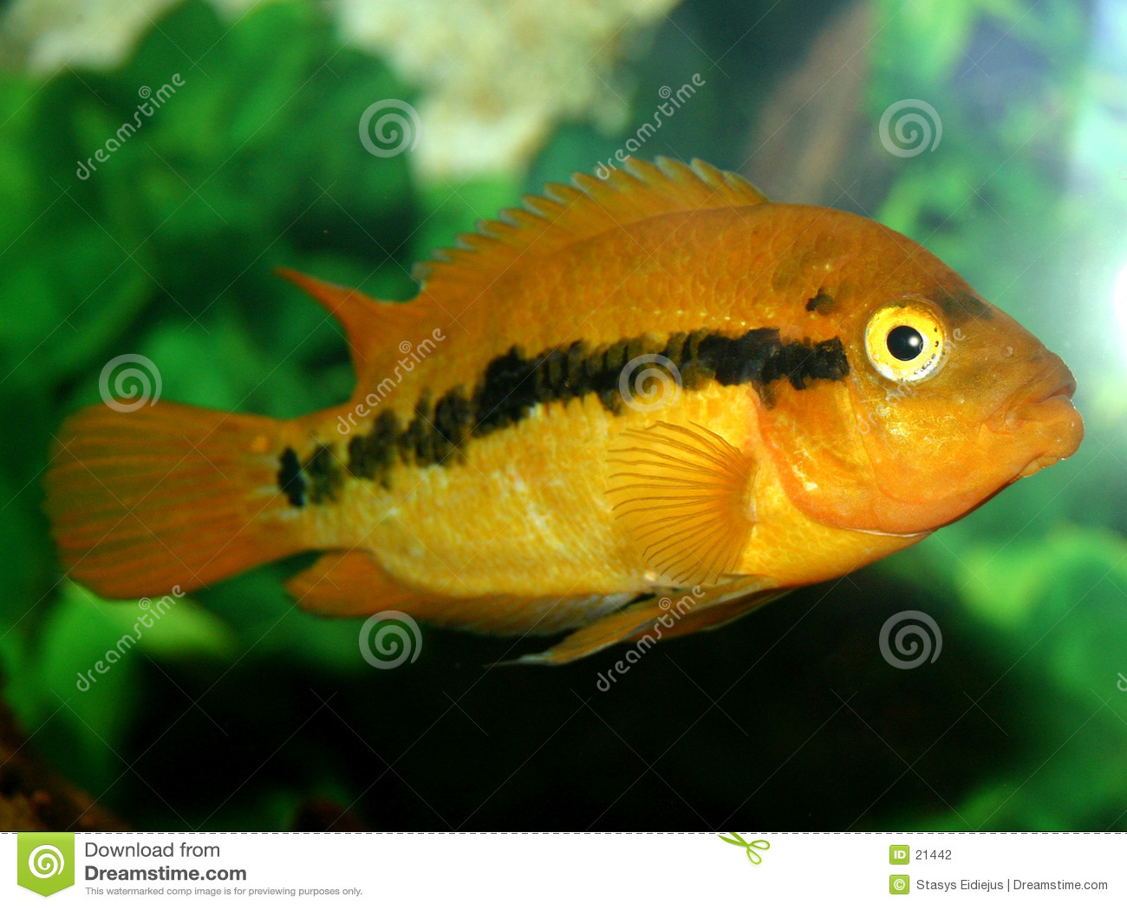 Serie III de los pescados