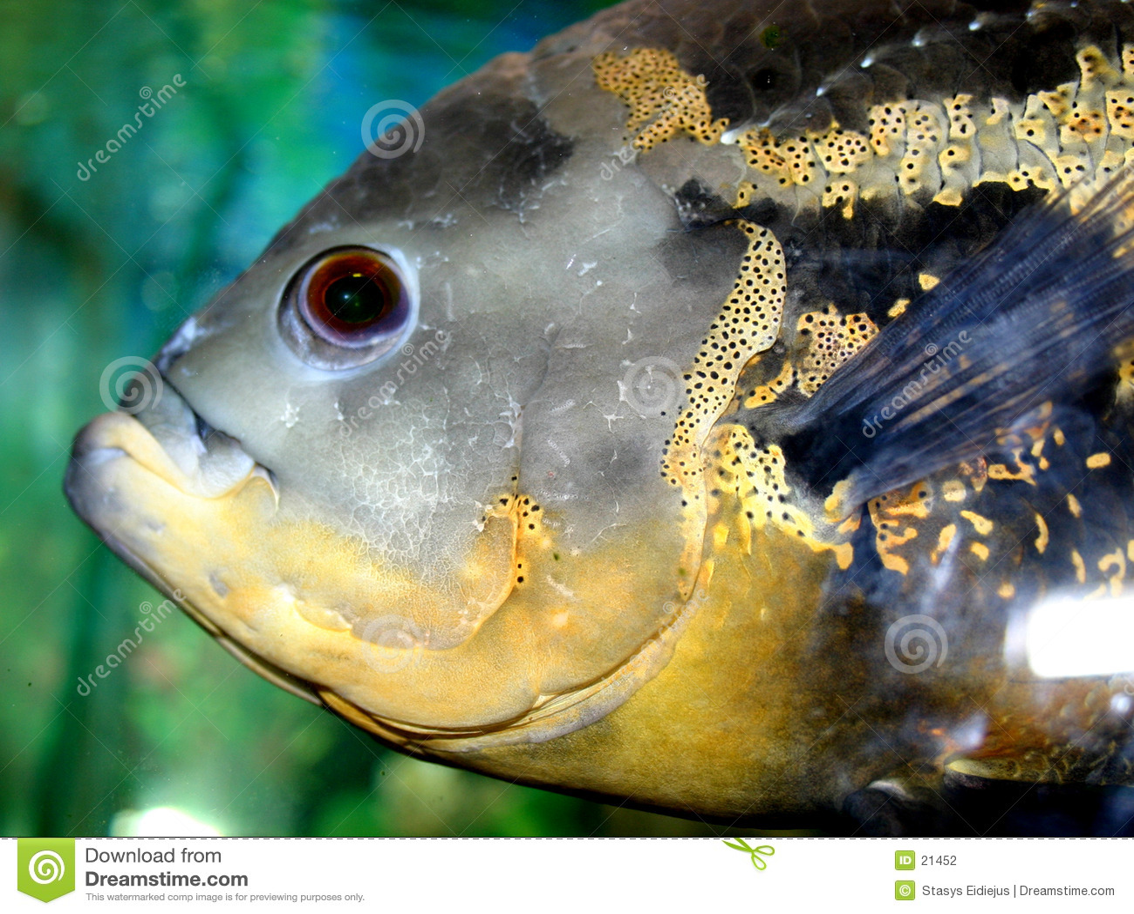 Serie VI de los pescados