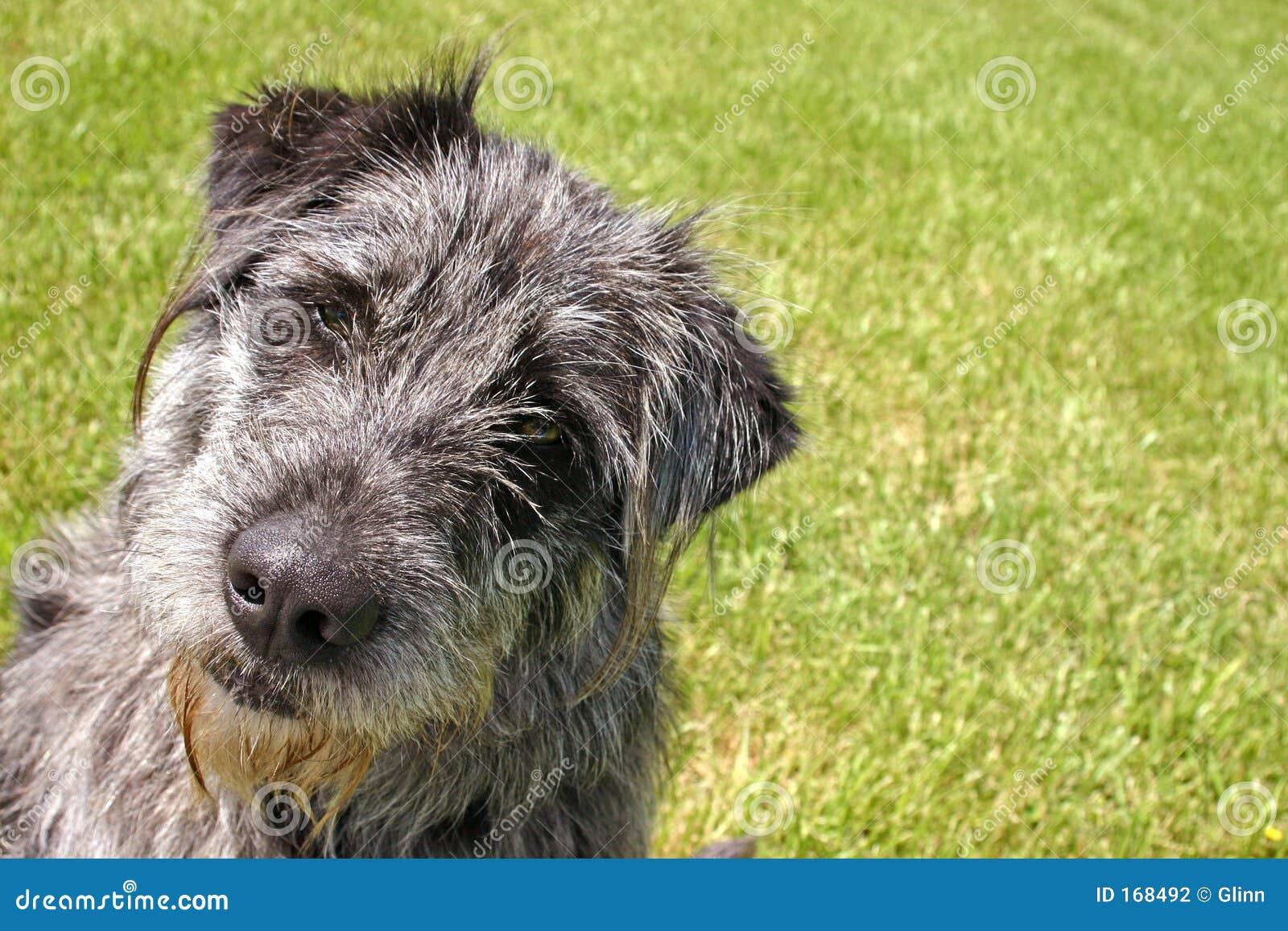 Serious-lookin  Dog