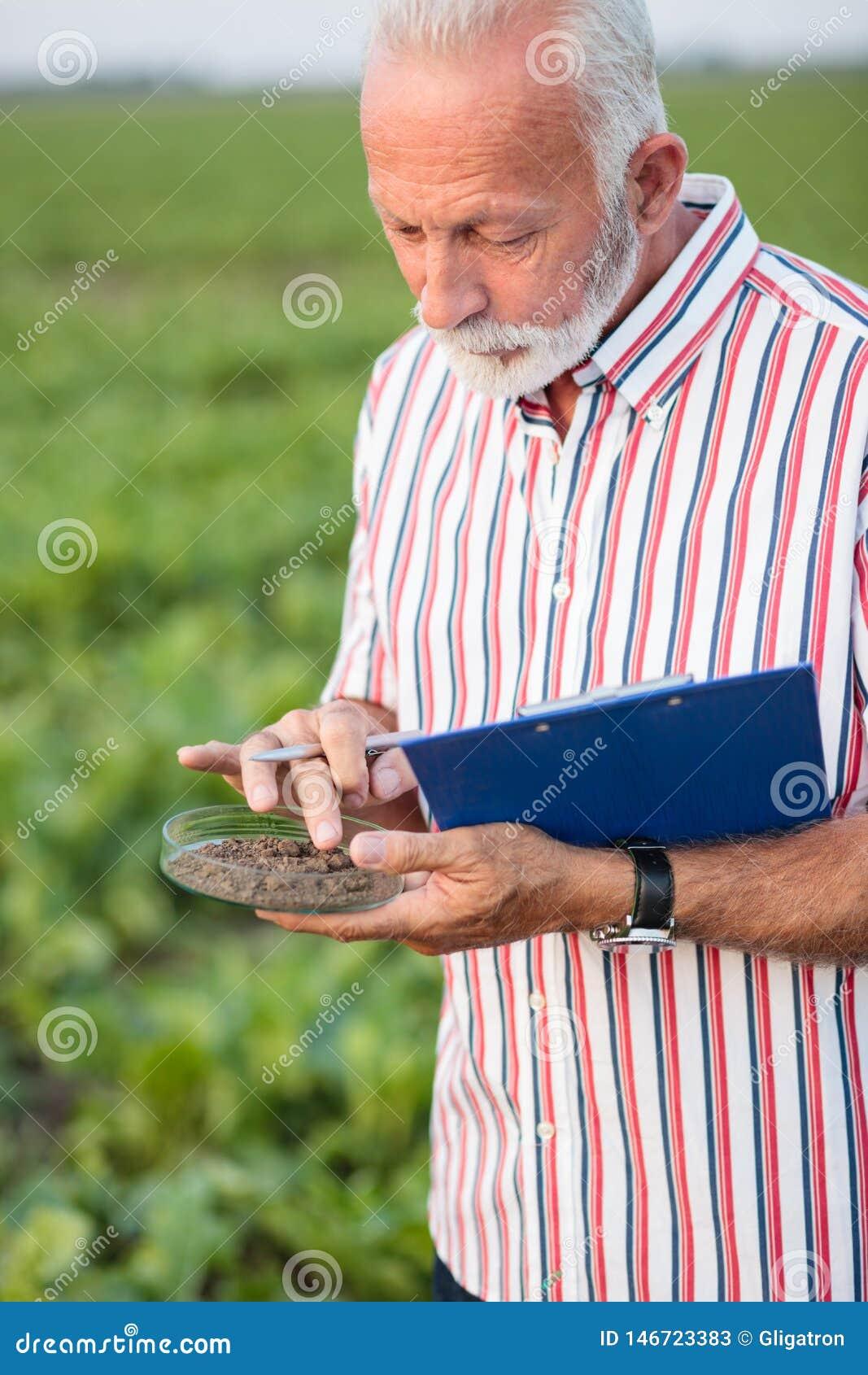 Senior agronomist or farmer examining soil samples in a field