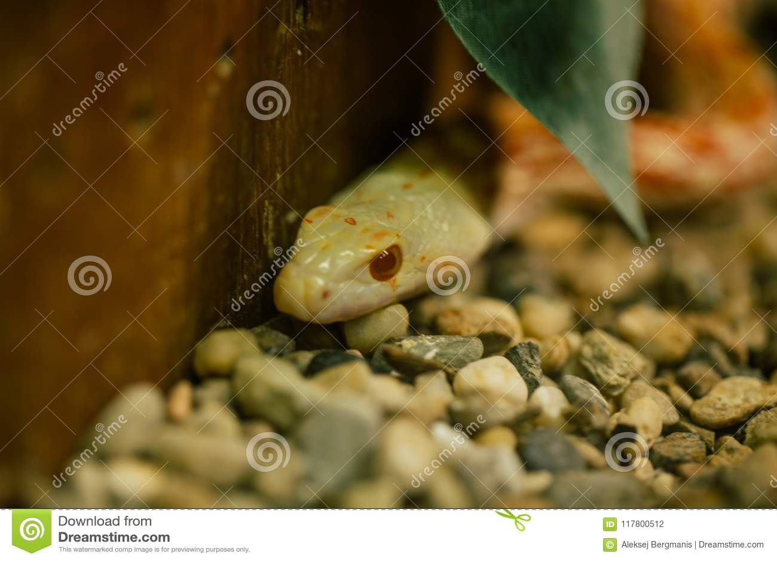 Serpent de Yelow dans la faune de zoo dans le zoo Italie de safari d apulia de Fasano