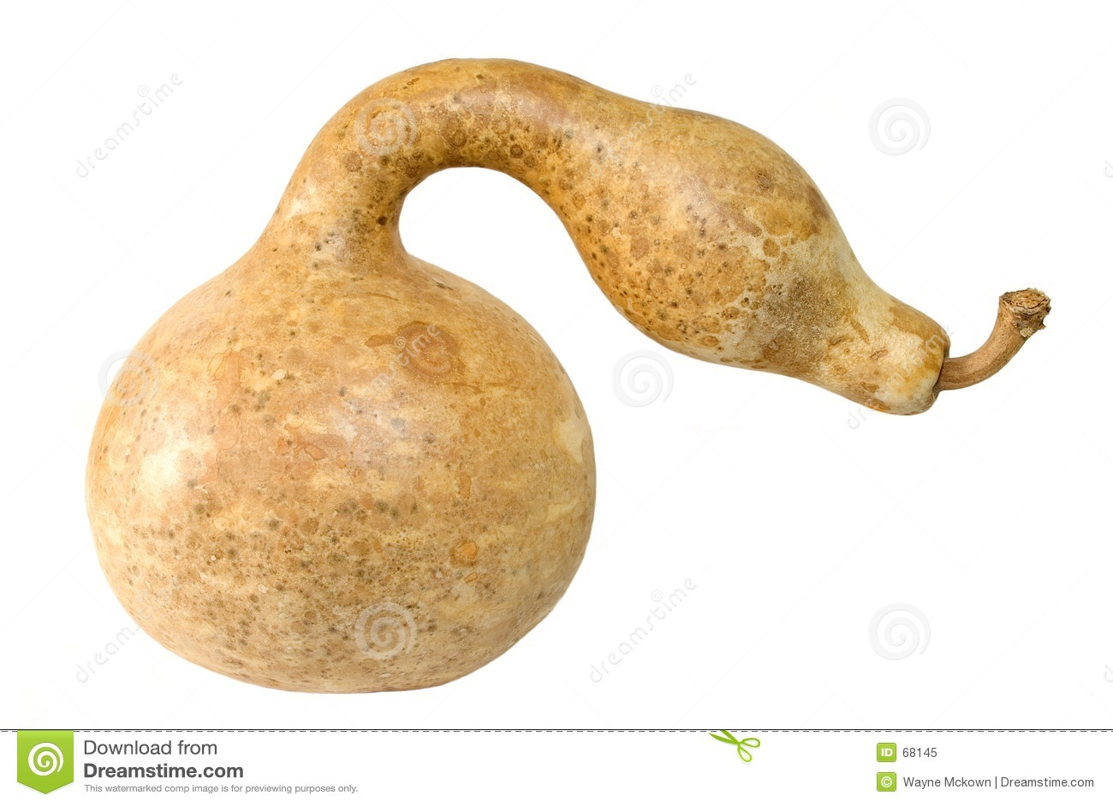 Serpent regardant la courge
