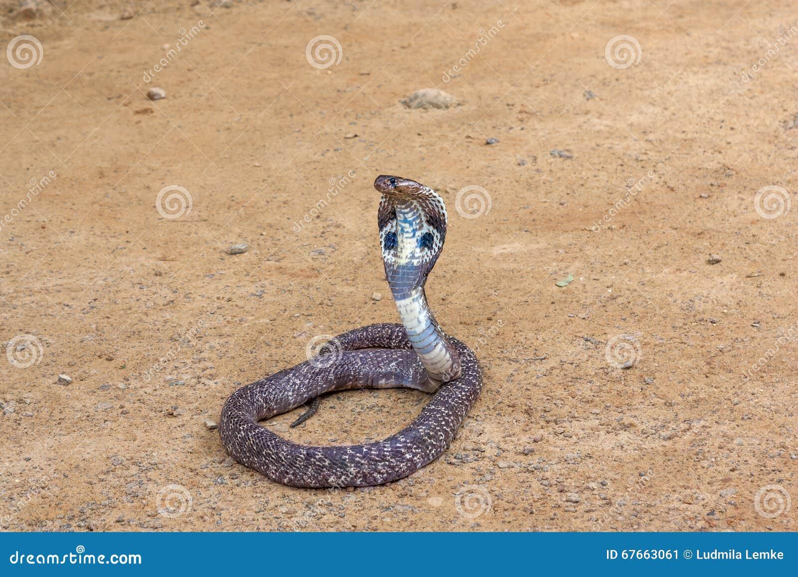 змея в маске какое место заняла