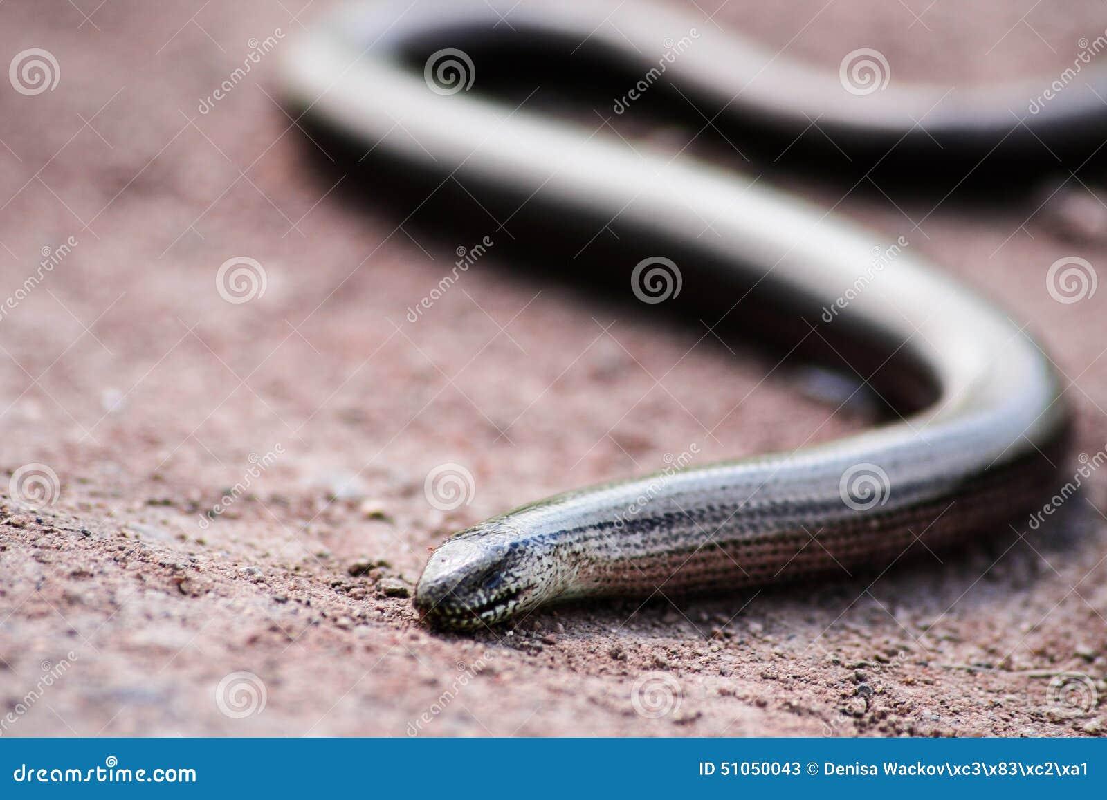 Serpente di erba