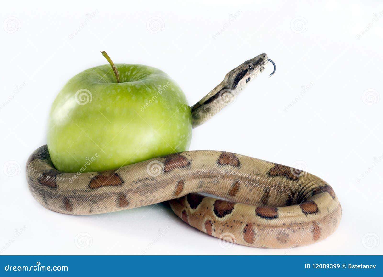 Serpente e maçã.