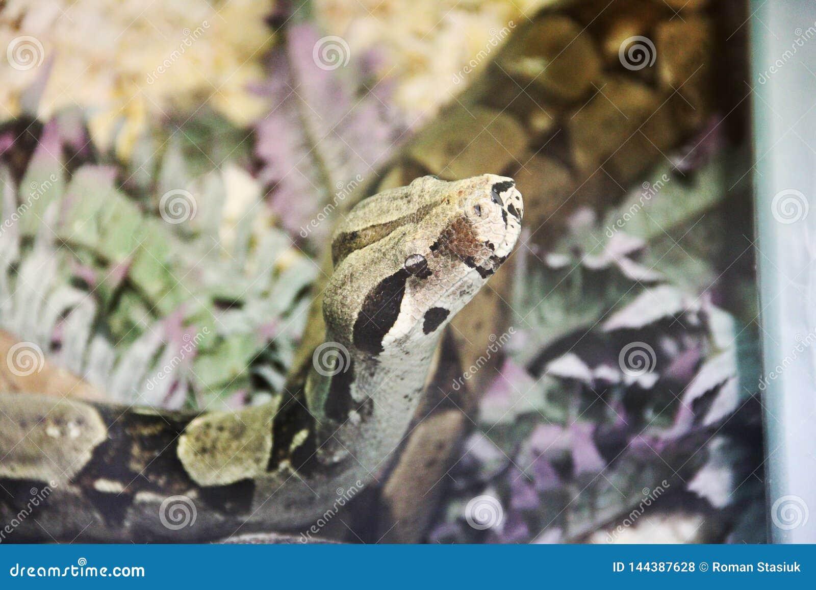 Serpente no terrarium