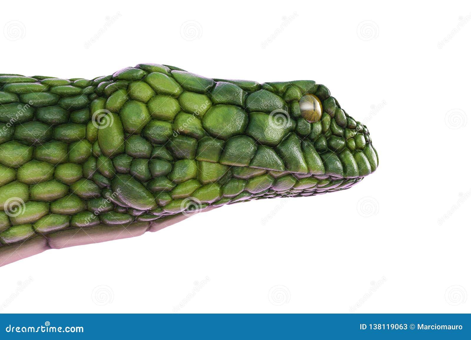 Serpente verde gigante em um fundo branco