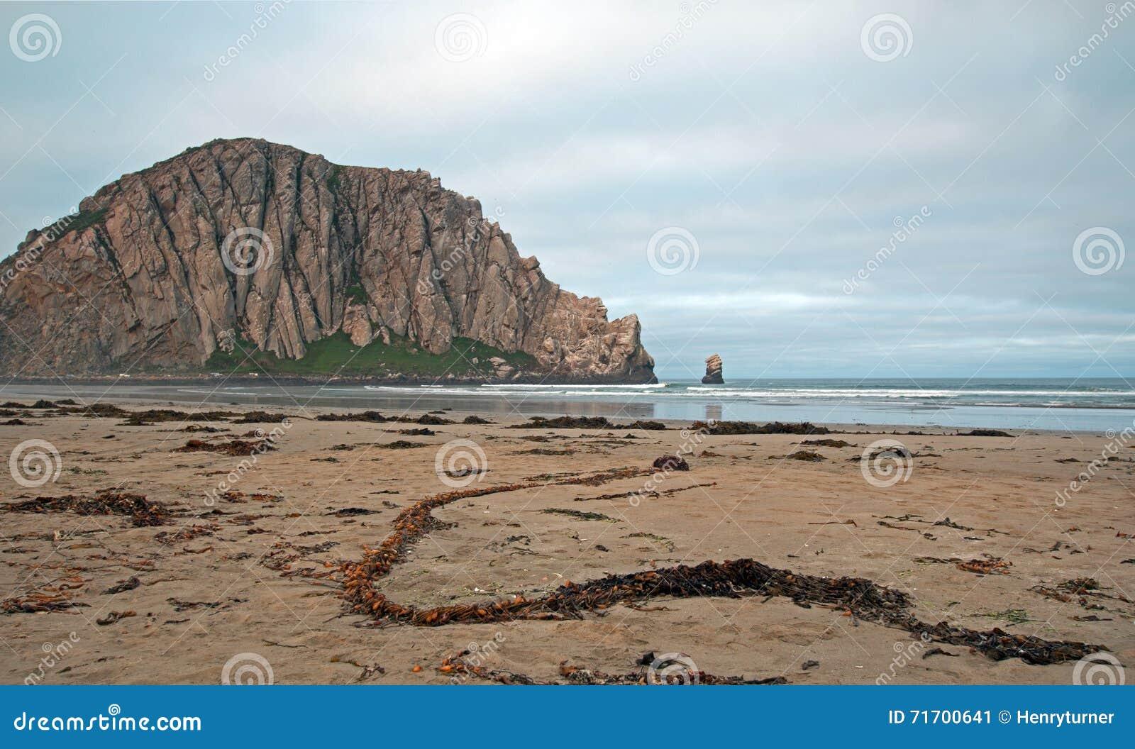 Serpentine sea kelp at morro rock at sunrise at morro bay for California beach vacation spots