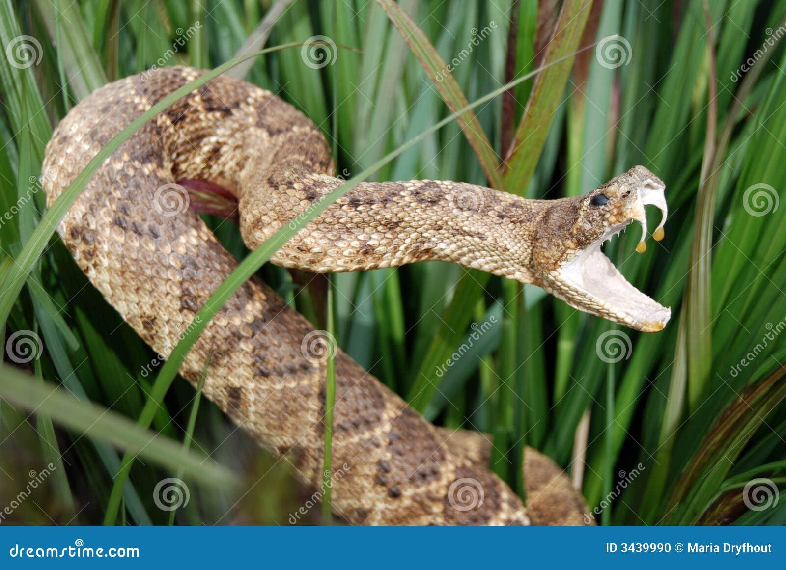 Serpiente disimulada
