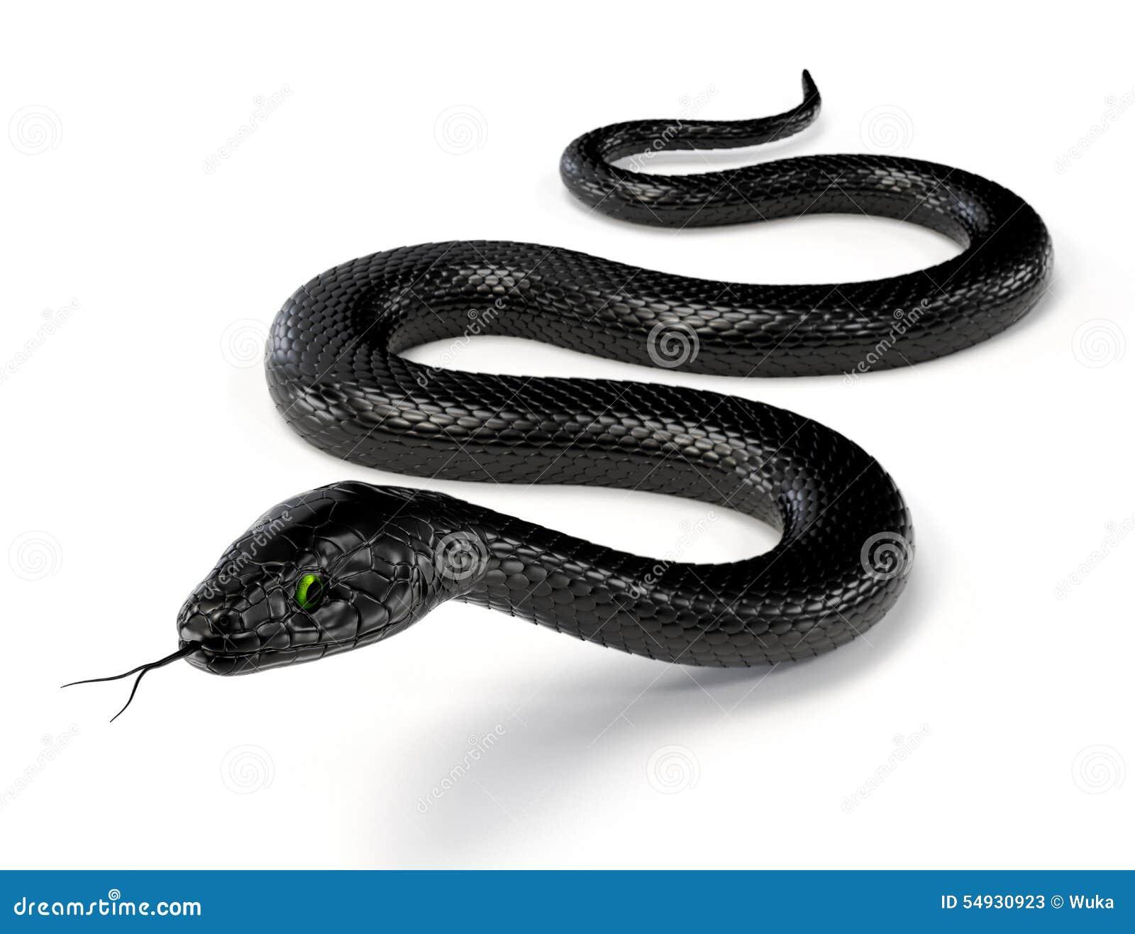 Serpiente negra III