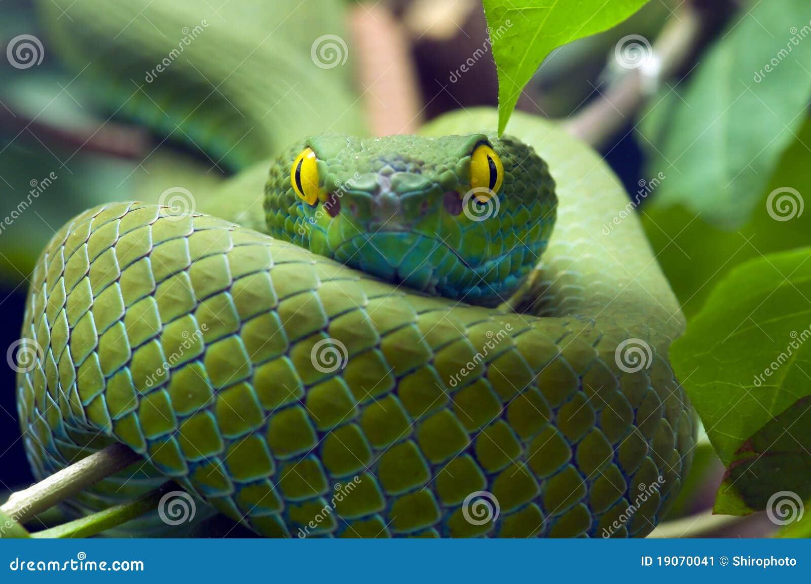 Serpiente verde