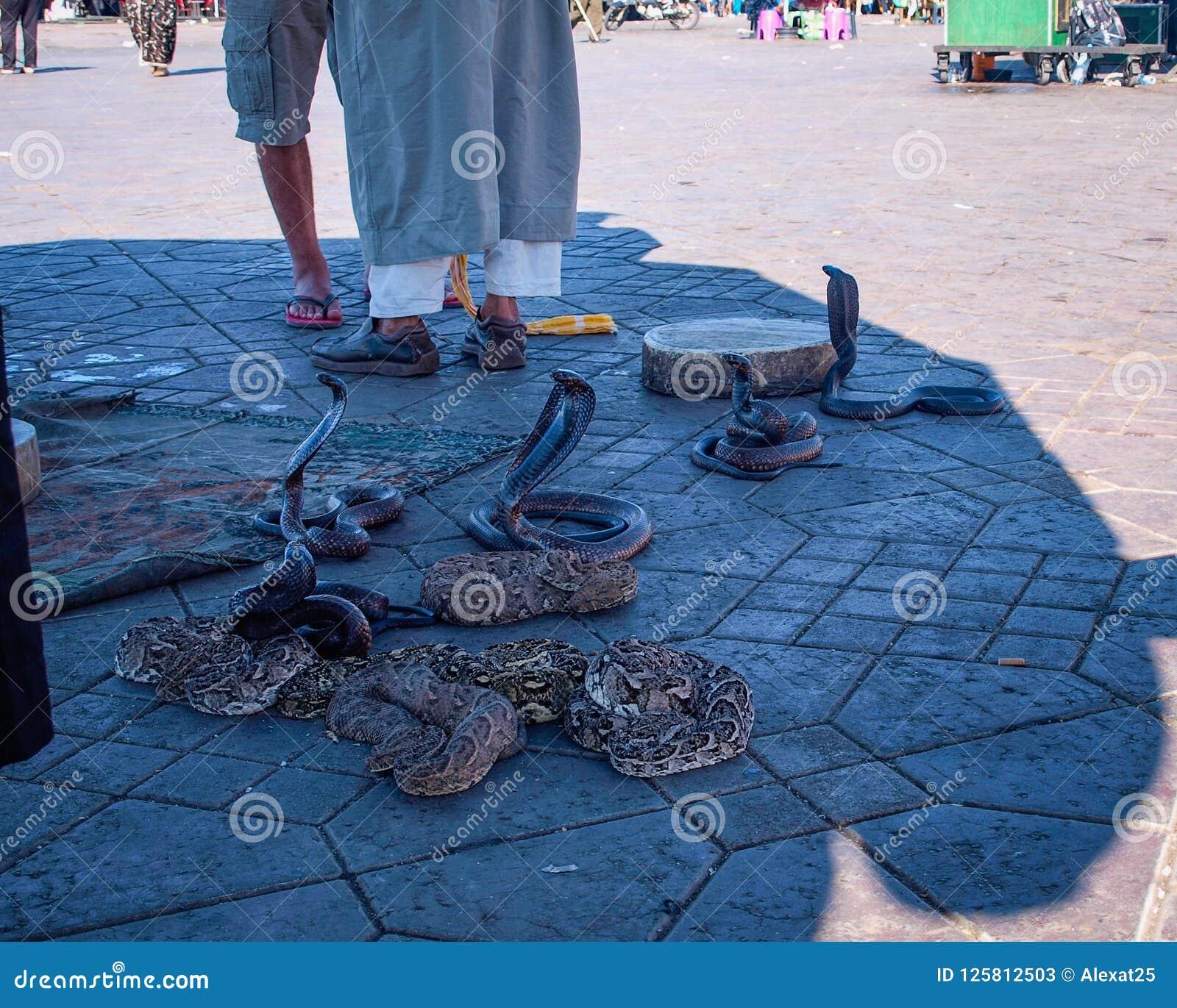 Serpientes en el cuadrado EL-Fnaa en Marrakesh