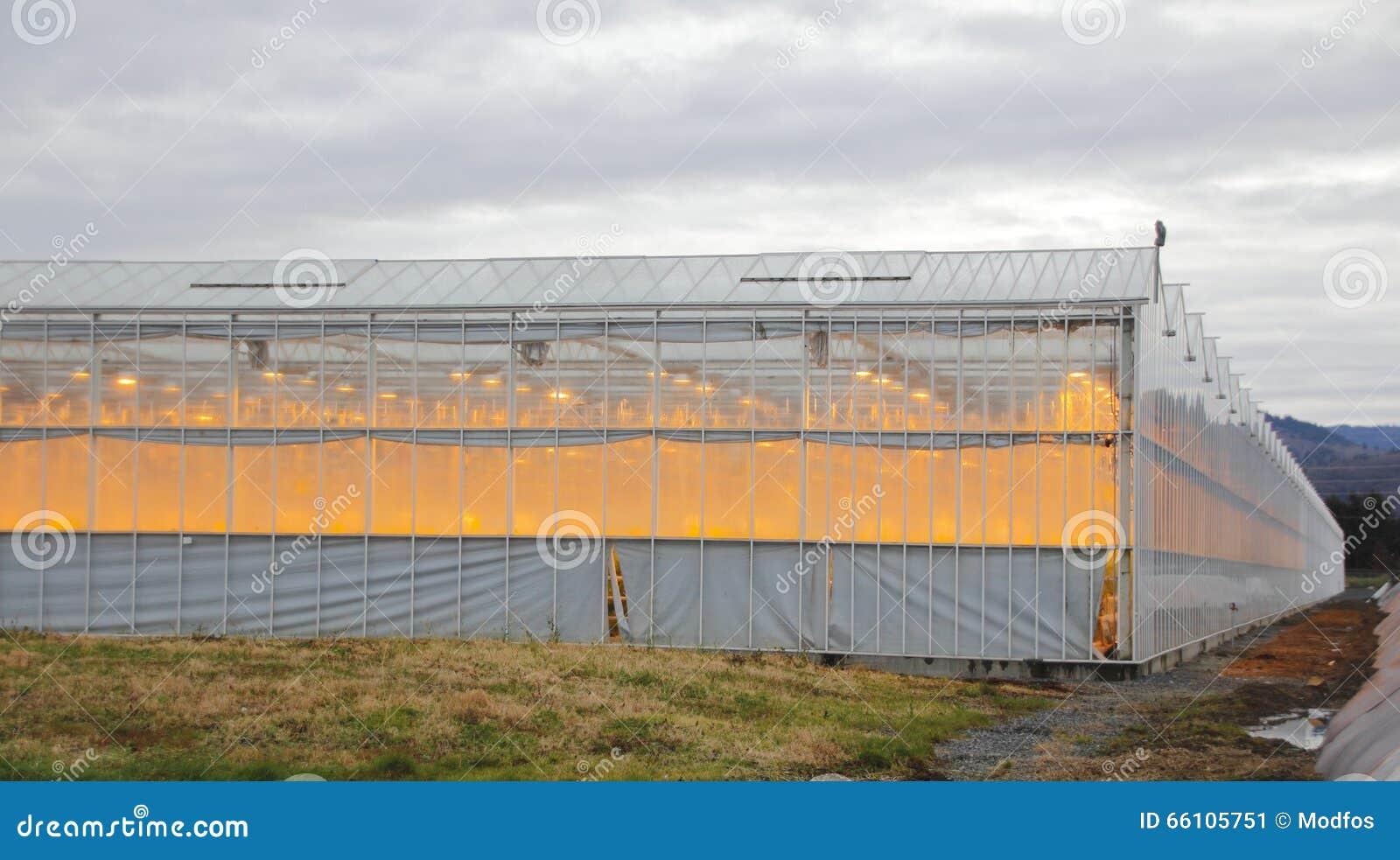 Illuminazione artificiale per serre lampade per la coltivazione