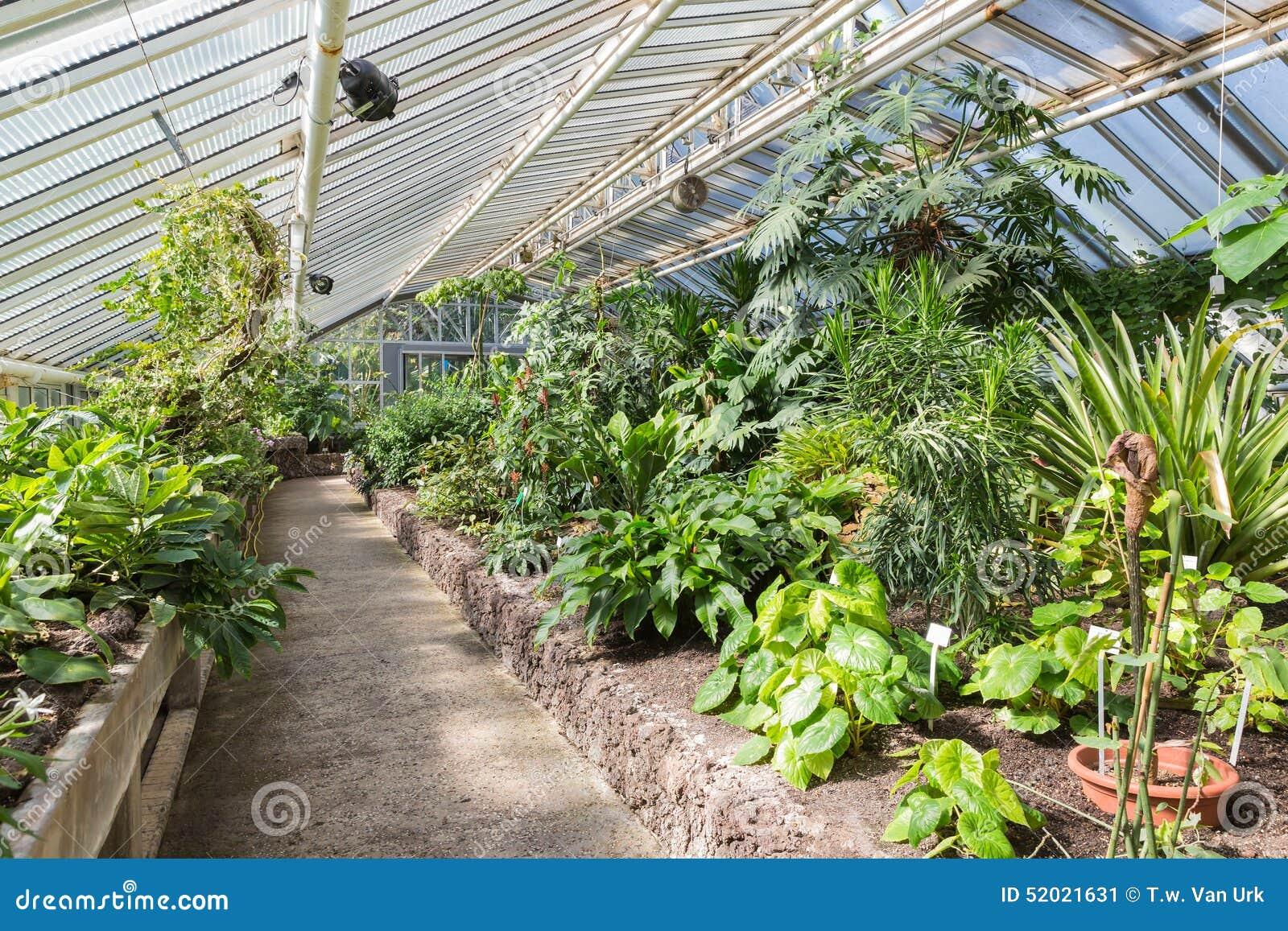 Serre chaude avec des plantes tropicales dans le jardin for Le jardin zoologique de berlin
