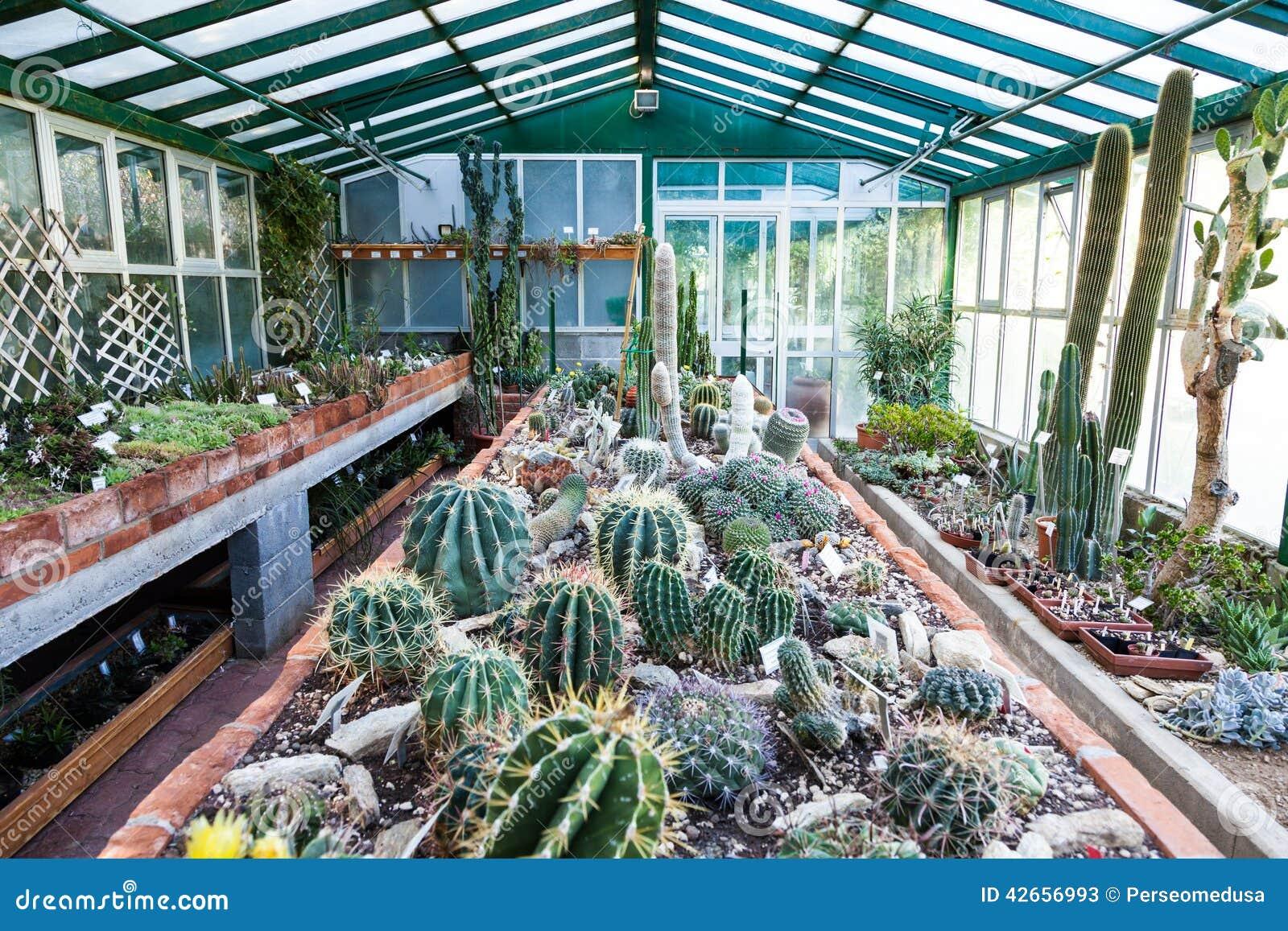 serre chaude de cactus photo stock image 42656993. Black Bedroom Furniture Sets. Home Design Ideas