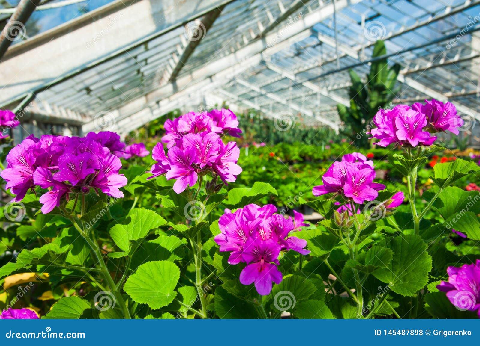 Serre chaude de jardin agrobusiness
