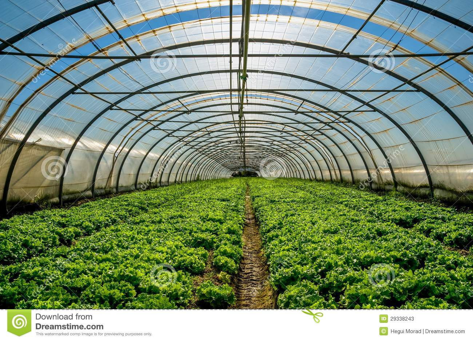 serre chaude pour la culture de la salade image stock image du cordon lumi re 29338243. Black Bedroom Furniture Sets. Home Design Ideas
