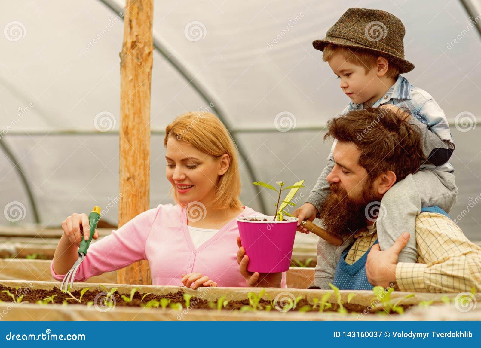 Serre Serrearbeiders het gelukkige familiewerk in serre serre die met gelukkige familie planten Tuinierende goeroe