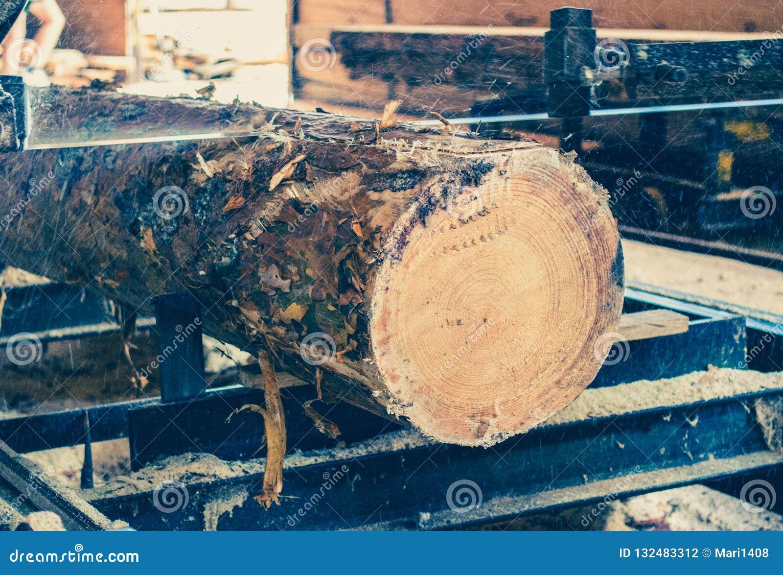 Serrería El proceso de trabajar a máquina abre una sesión las sierras de la máquina de la serrería el t