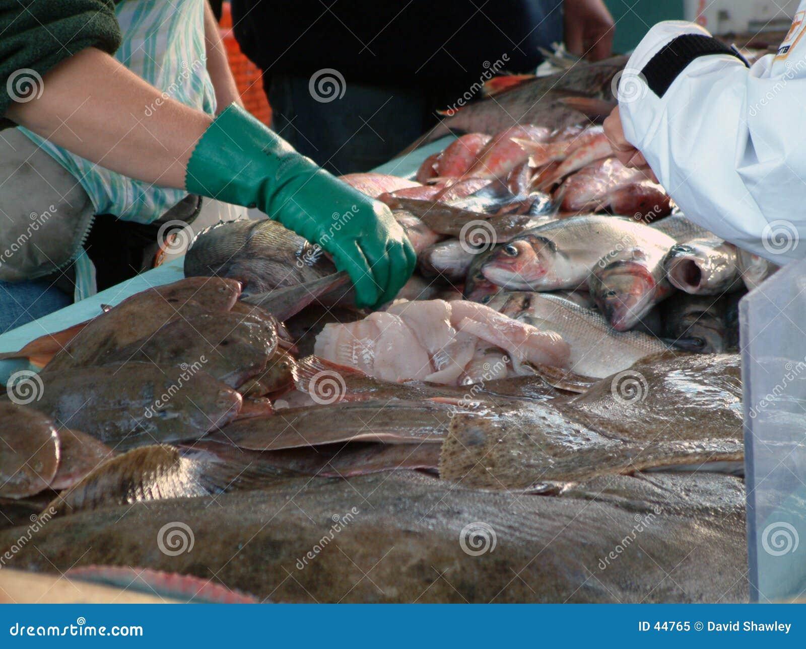 Servizio di pesci