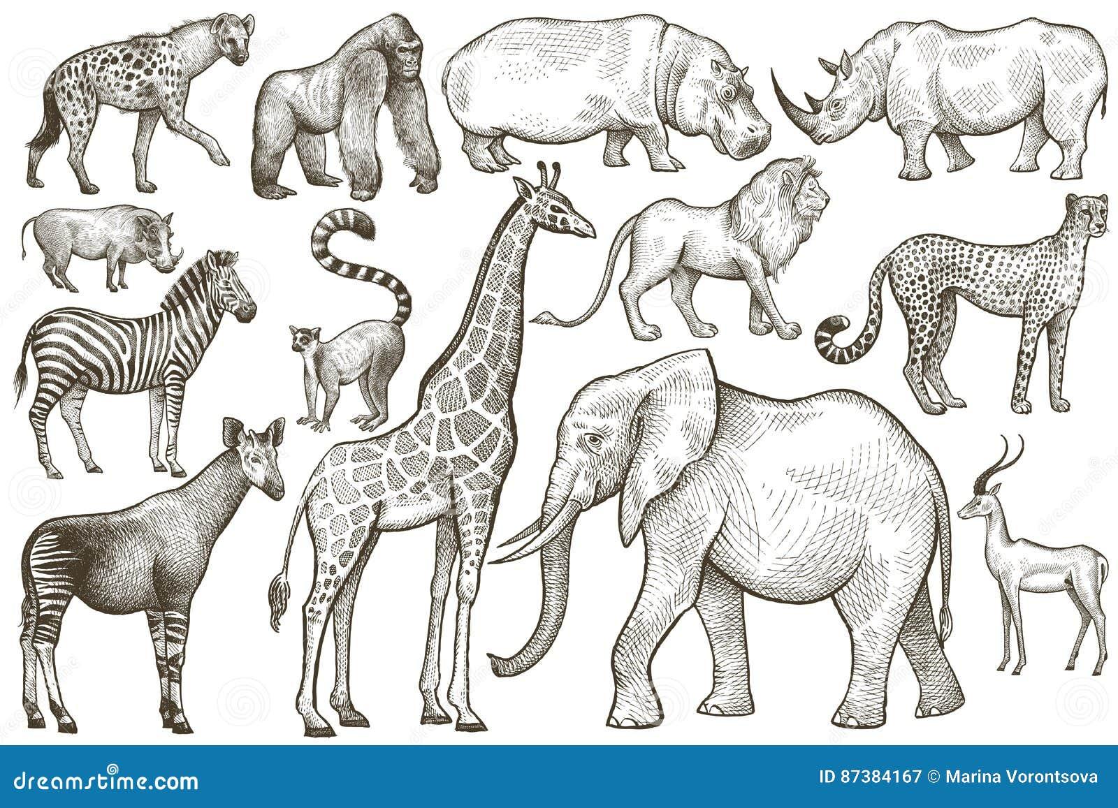 set of african animals stock vector illustration of hippopotamus