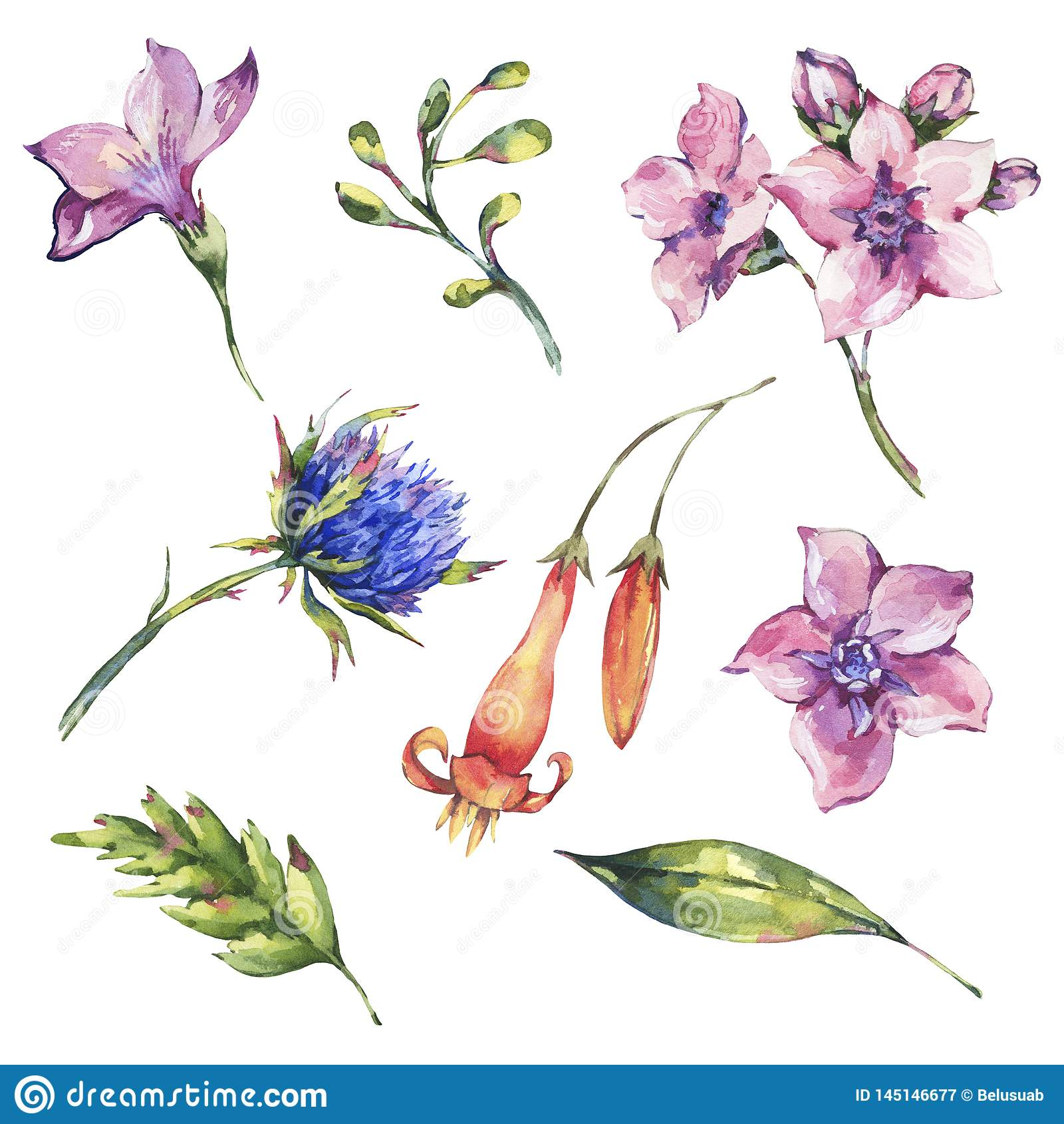 Set akwareli wildflowers kwieciści elementy, akwarela osety, menchie kwitnie