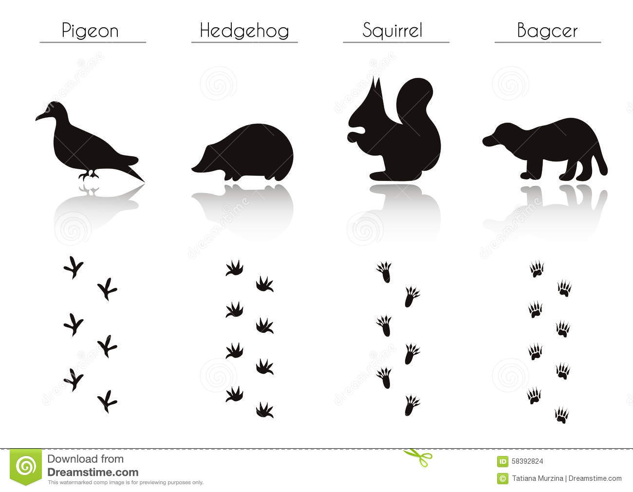 set of animal and bird trails with name stock food clipart borders foot clipart images