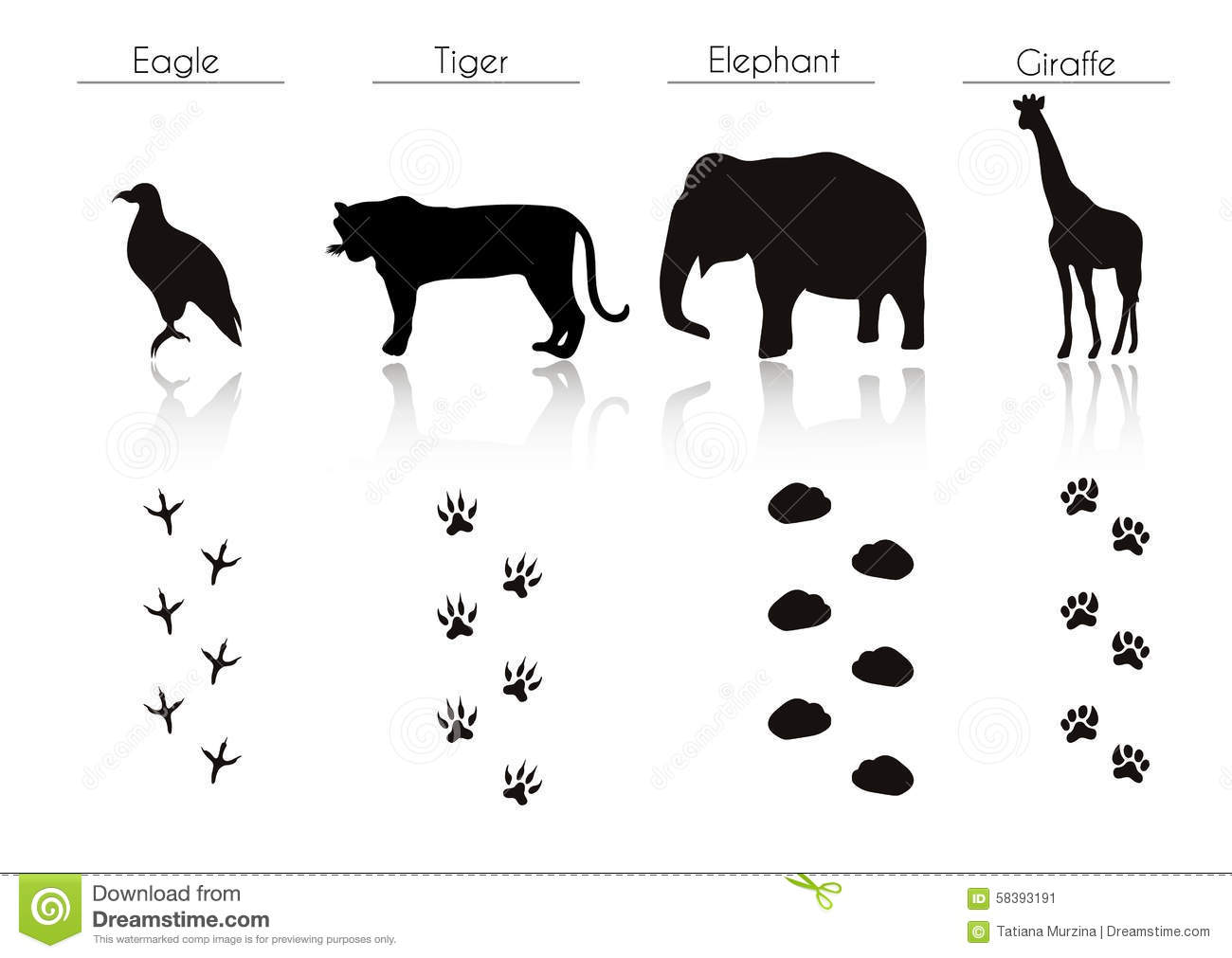 Set Of Animal And Bird Trails With Name Stock