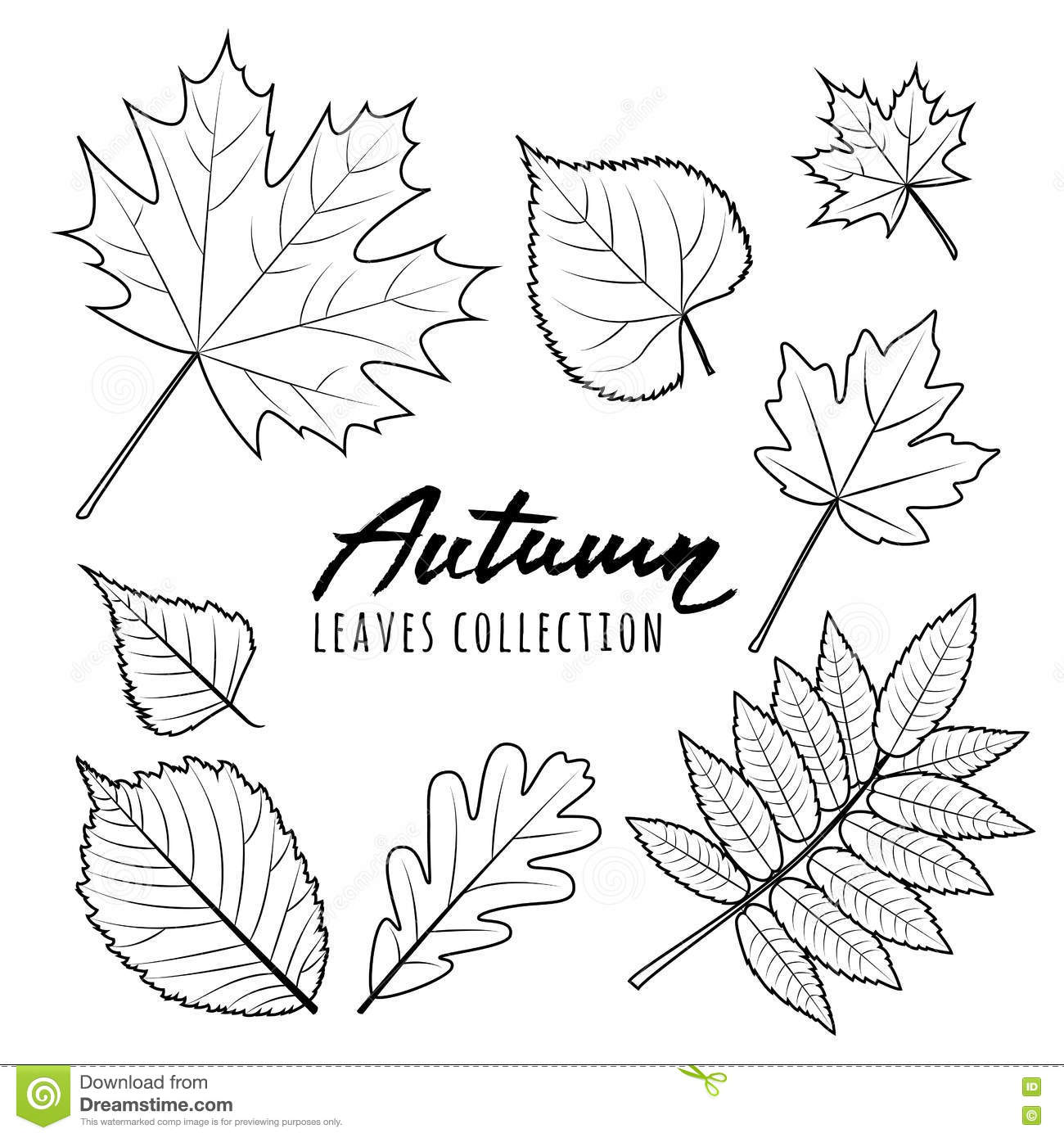 Set Of Autumn Leaves. Black And White Outline Hand Drawn ...