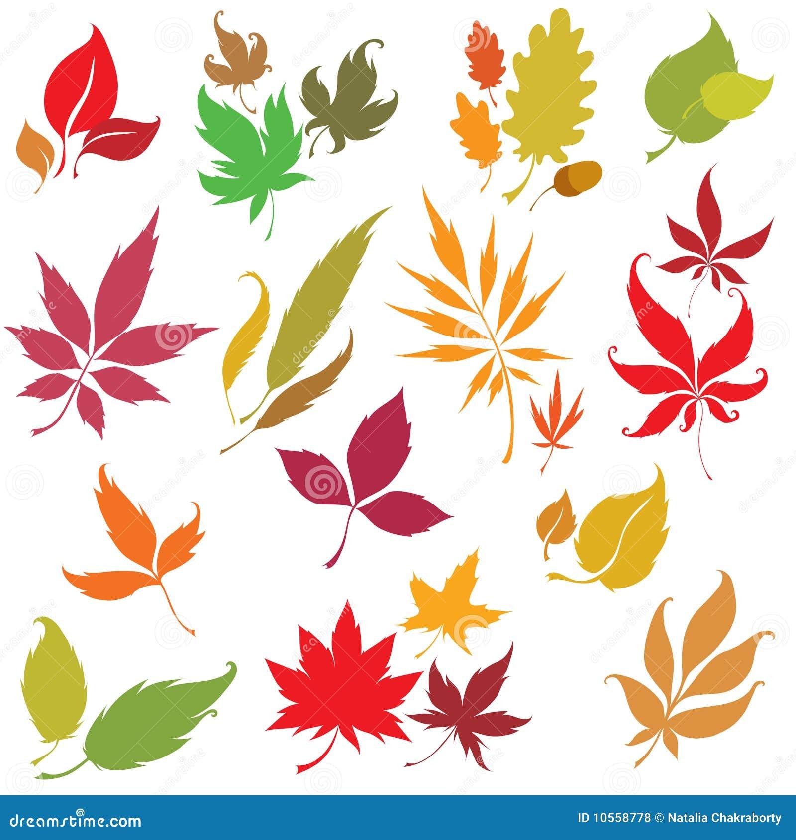 Set of autumn leaves design elements