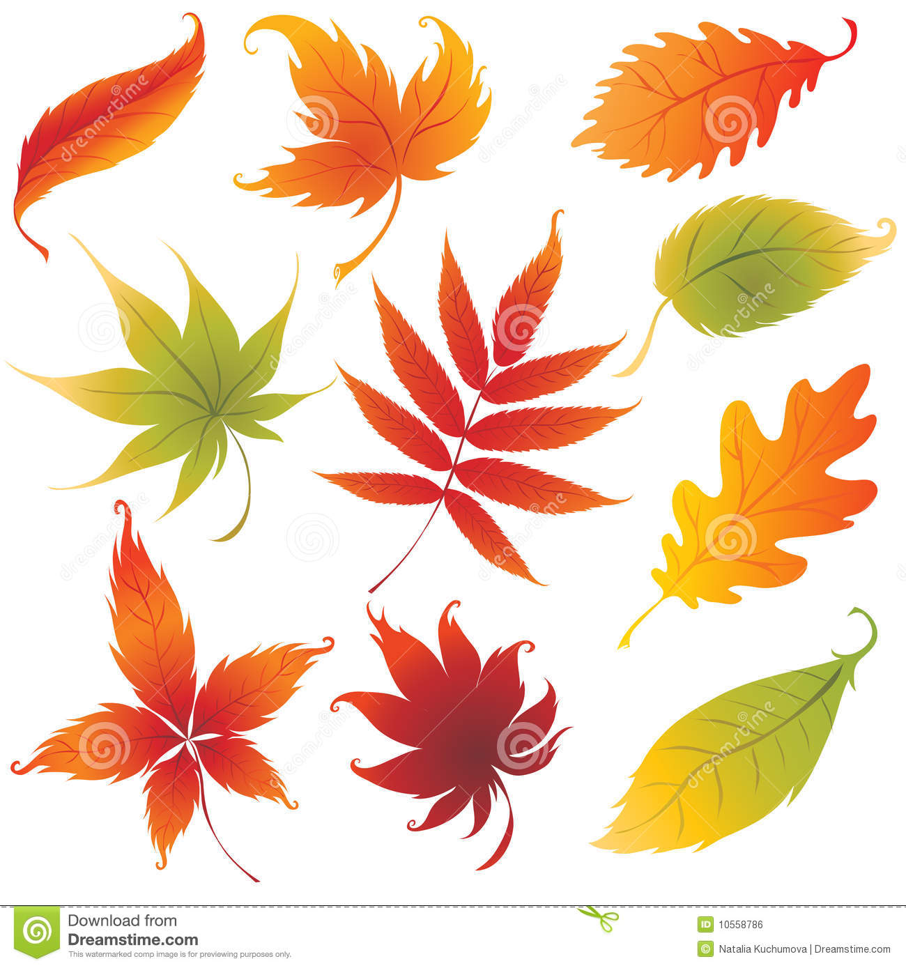 Real Leaves Design Backgrounds - Nature - PPT Backgrounds