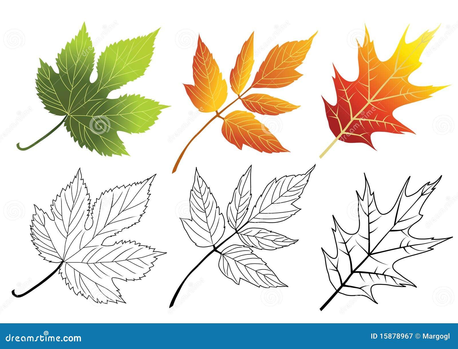 Set Of Autumn Leaves Maple Acer Negundo Hop Stock Vector