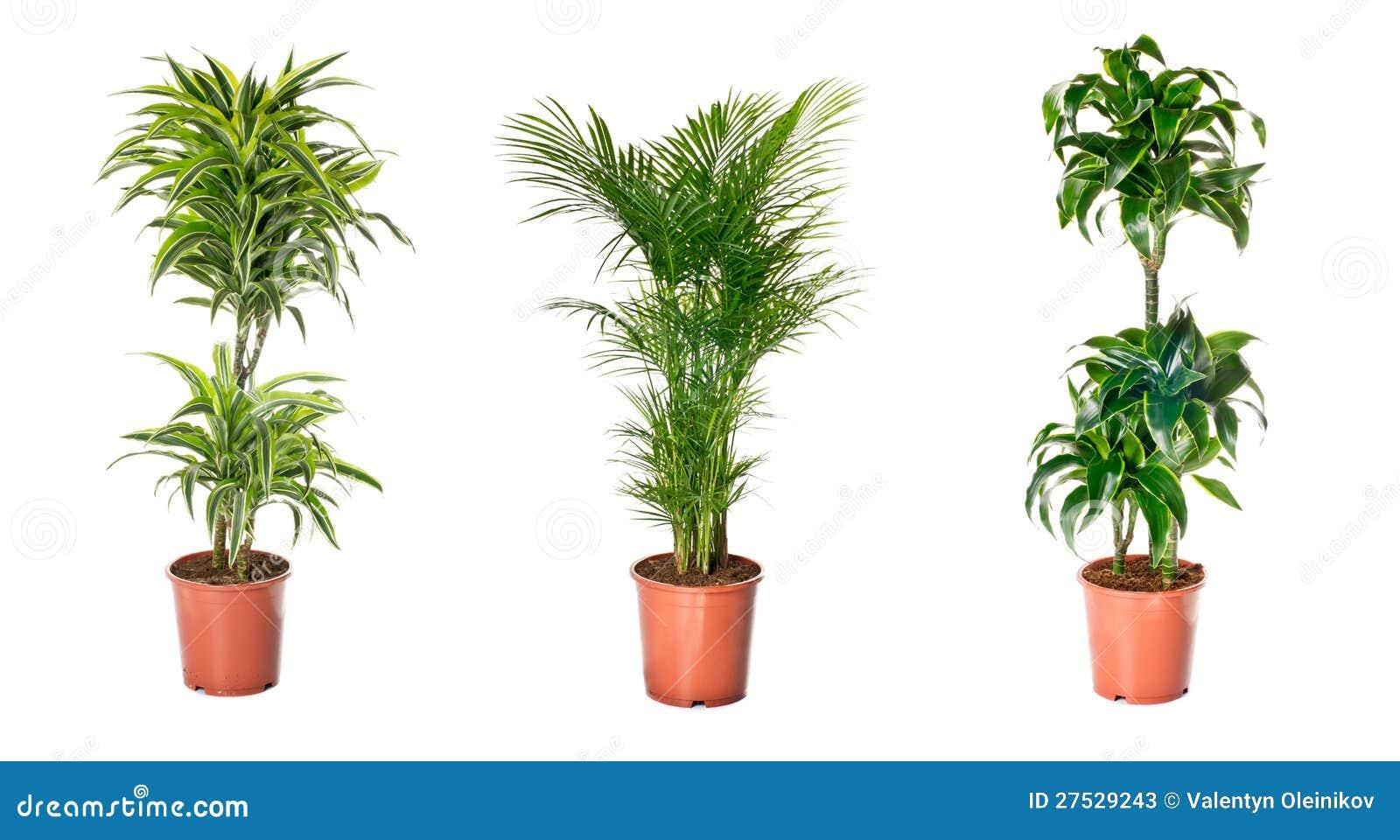 Set av inomhus växter fotografering för bildbyråer. Bild av ...