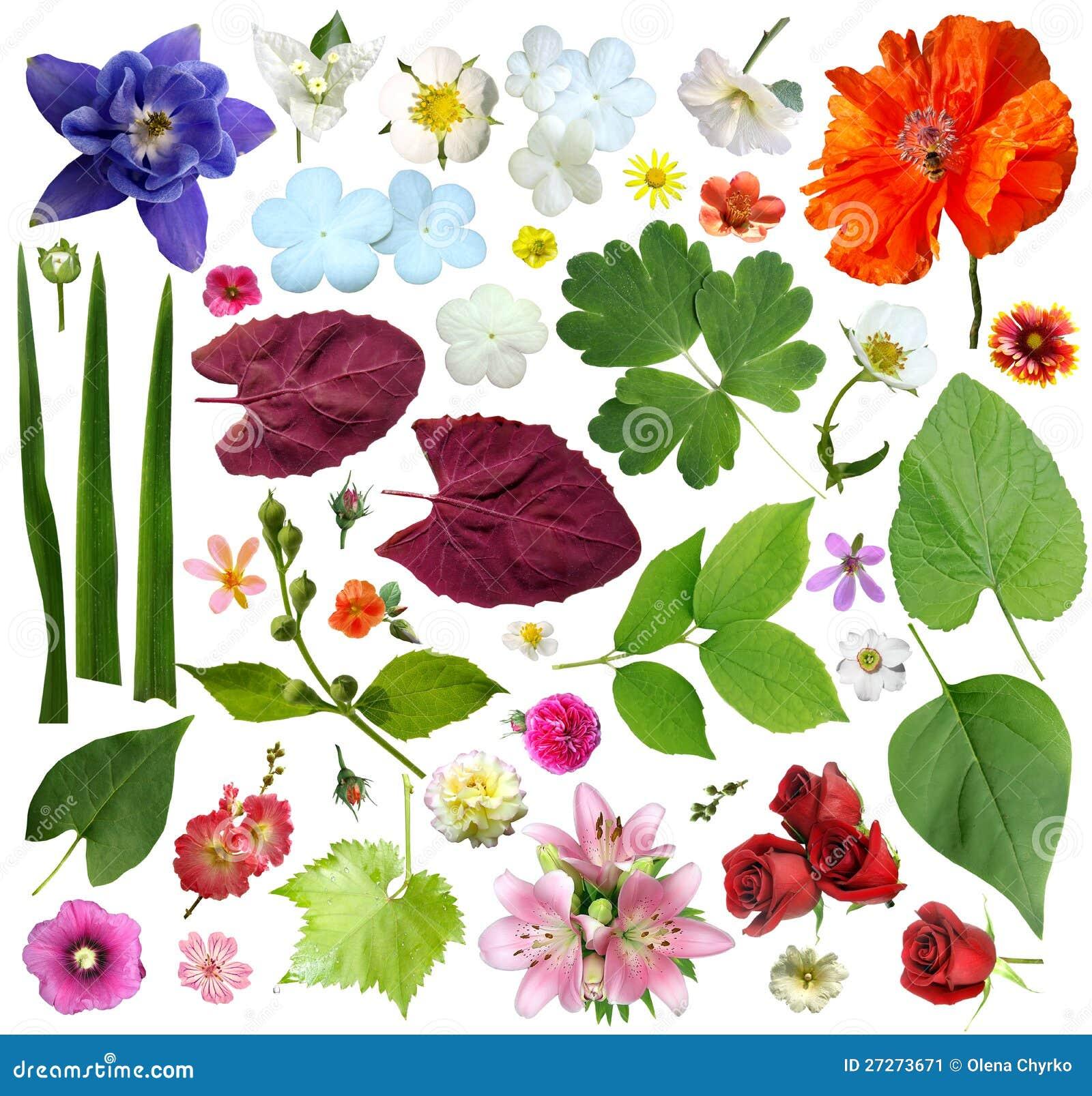 Set av växtelement - blommor och leaves.