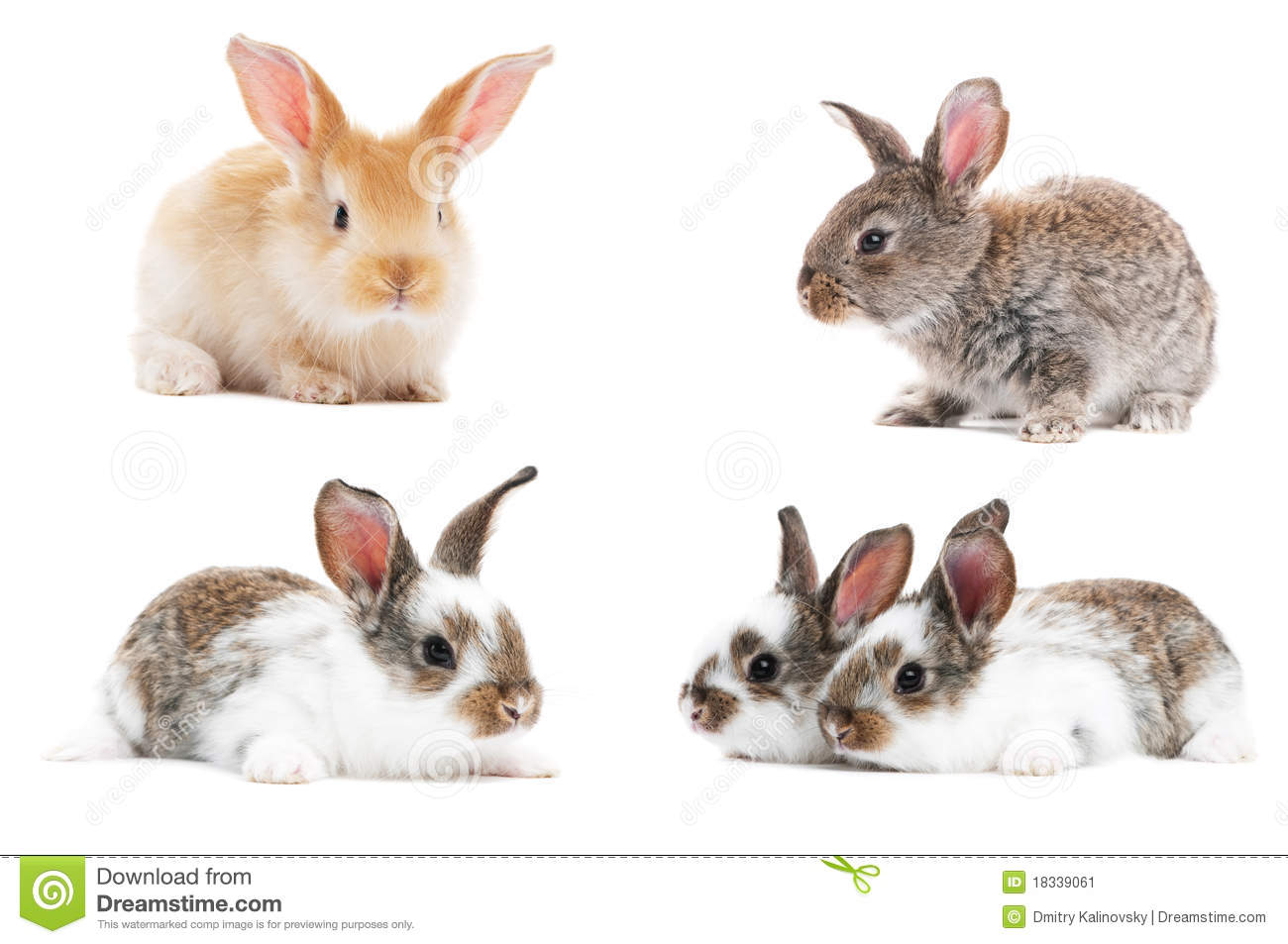 Set Of Baby Bunny Rabbits Stock Image - Image: 18339061