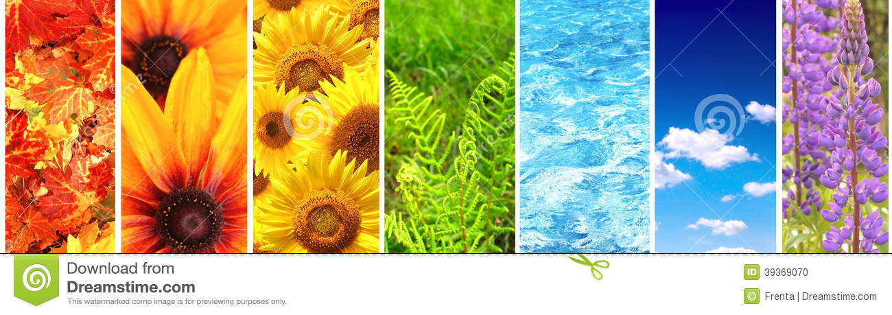 Set Of Banner With Nature Elements Stock Photo Image