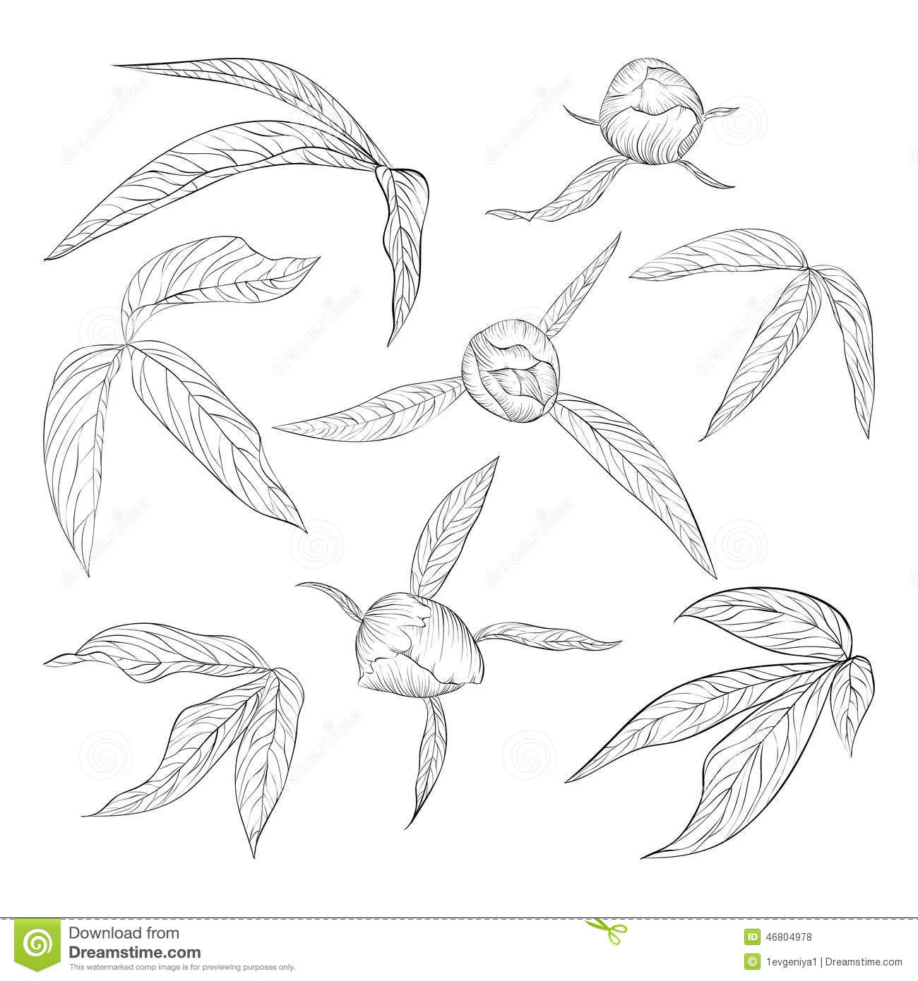 Contour Line Drawing Leaves : Set of beautiful black and white peony leaves buds