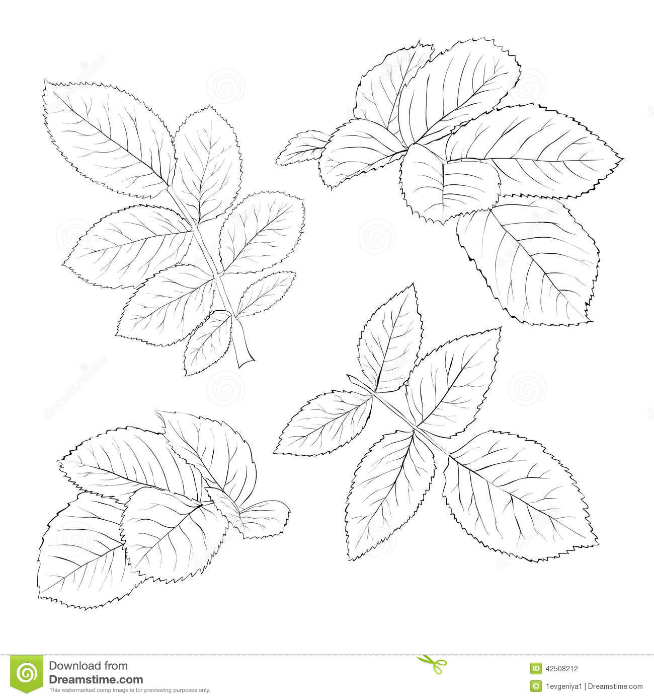 Contour Line Drawing Leaves : Set of beautiful black and white rose leaves isolated on