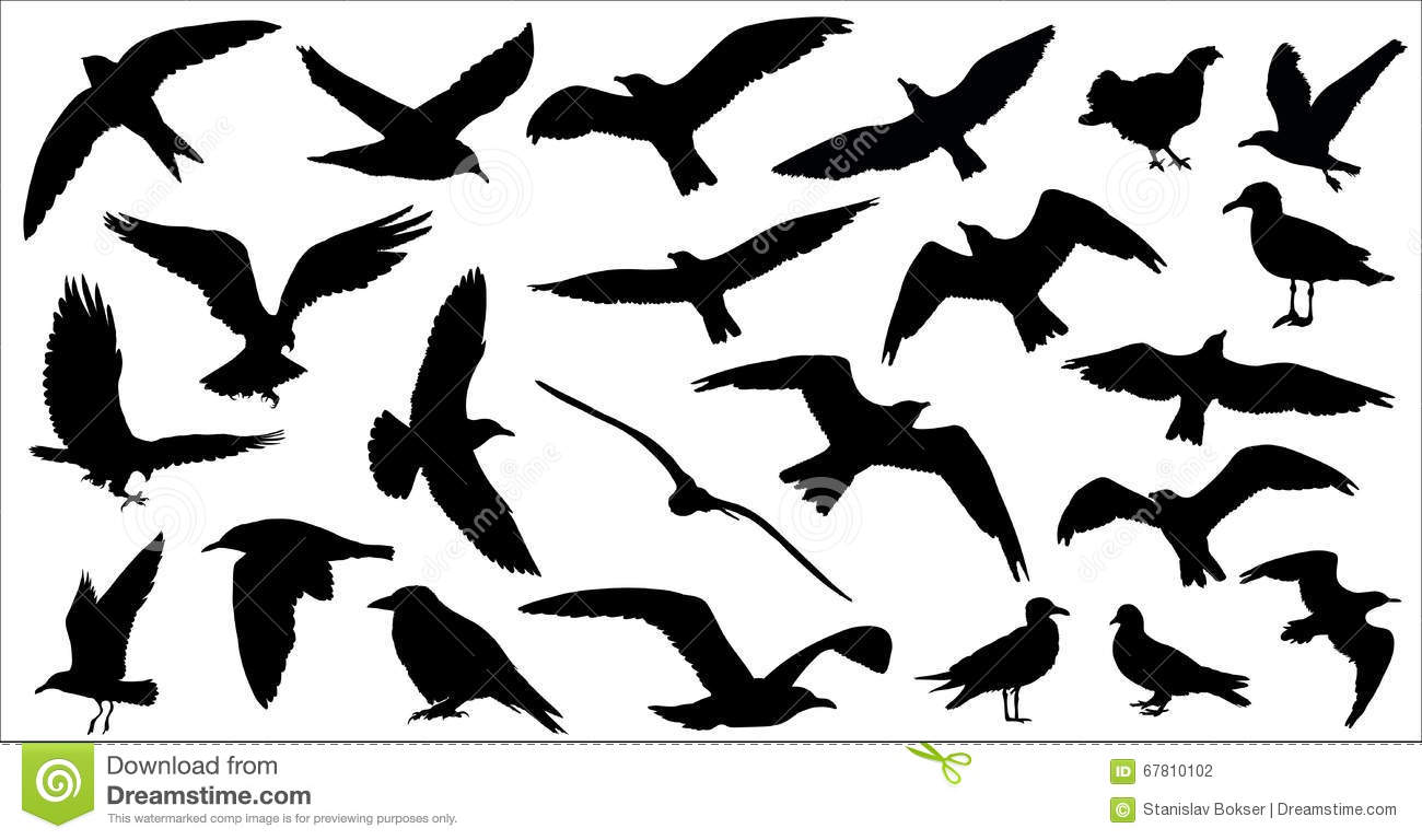 Birds Silhouettes (Black And White) Royalty-Free Stock ...