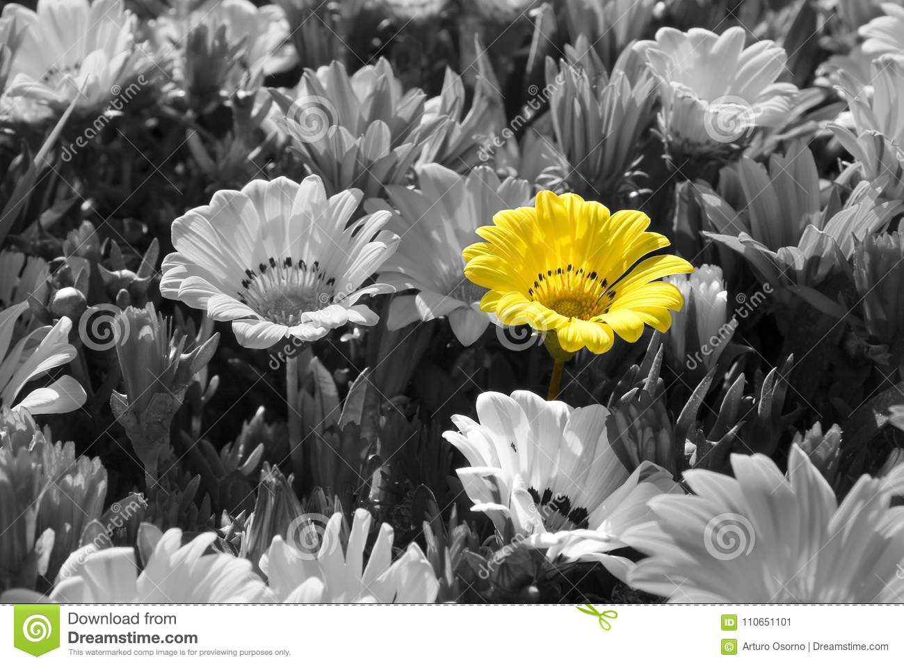 Flowers on black and white one in yellow color