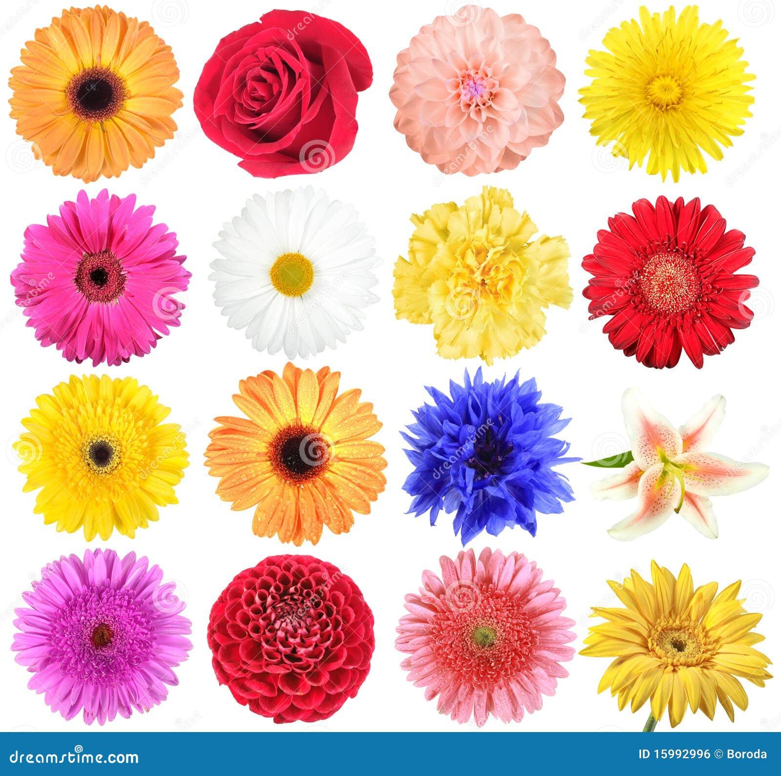 Set blumen stockfoto bild von nachricht sch nheit for What makes flowers different colors