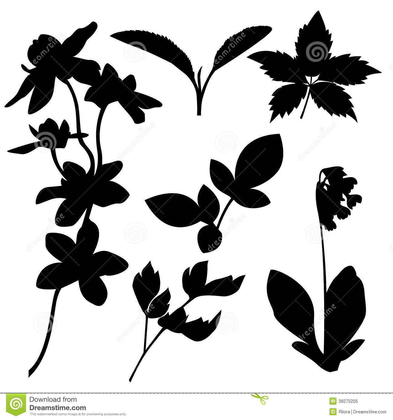 set of botanical silhouettes vector royalty free stock