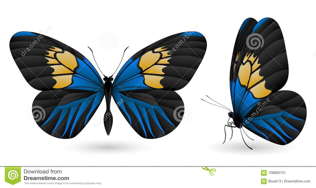 Set of butterflies isolated on white background
