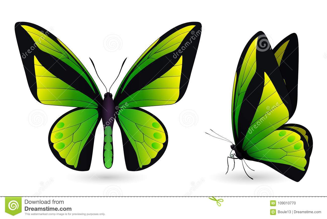 Set of butterflies on white background
